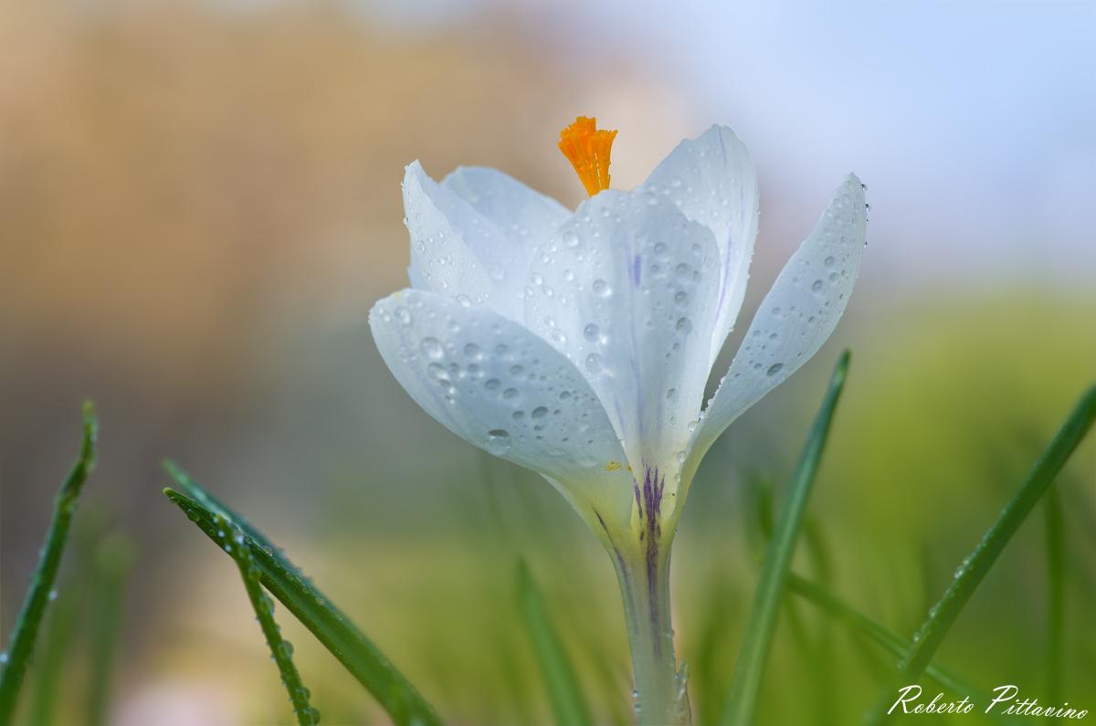 Freshness of spring...