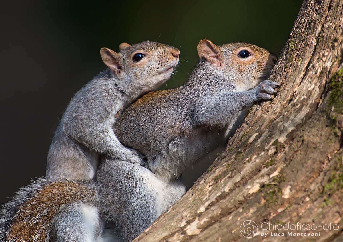 Air ... Spring for gray squirrels...