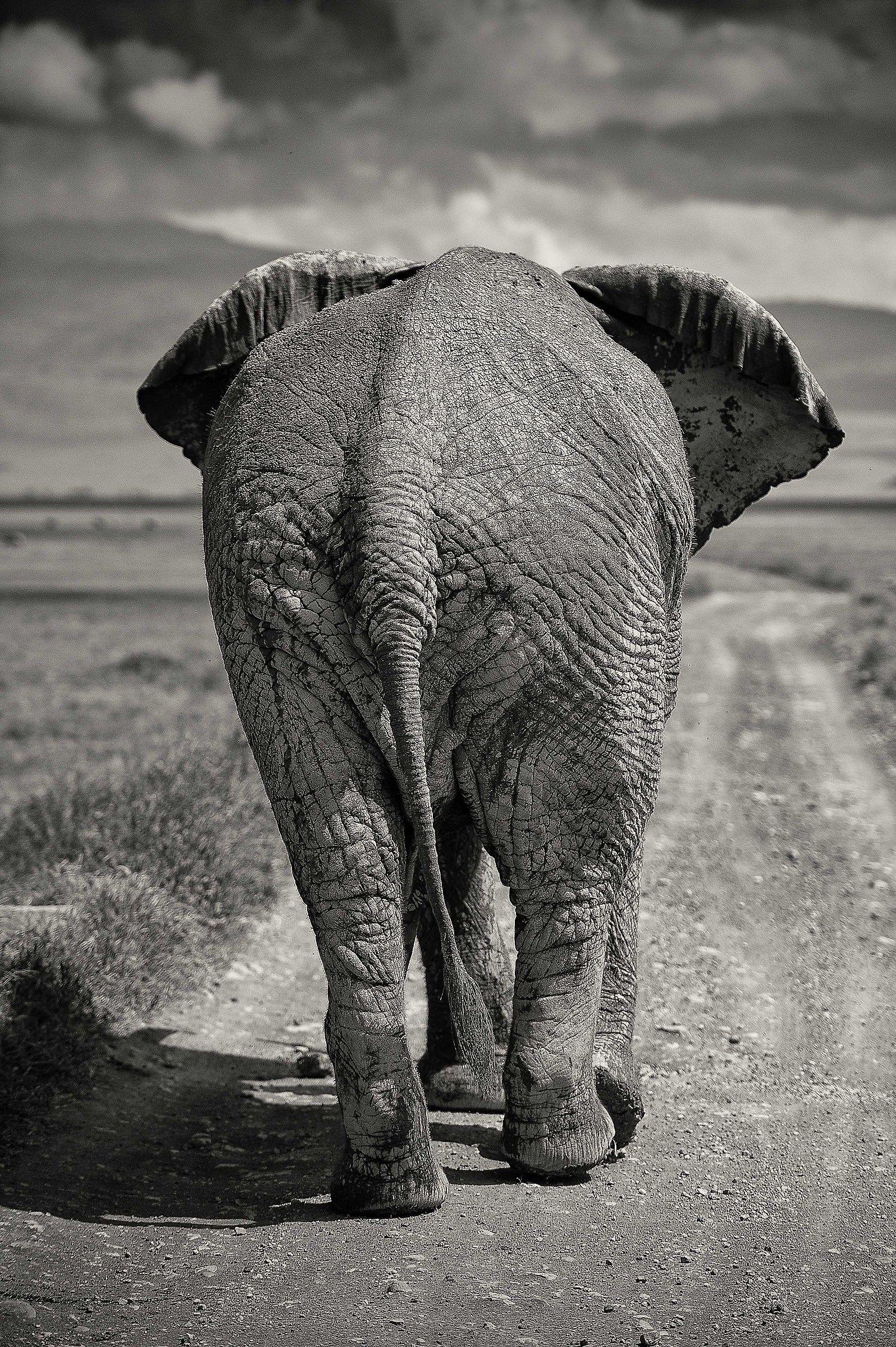 Save the Elephants...