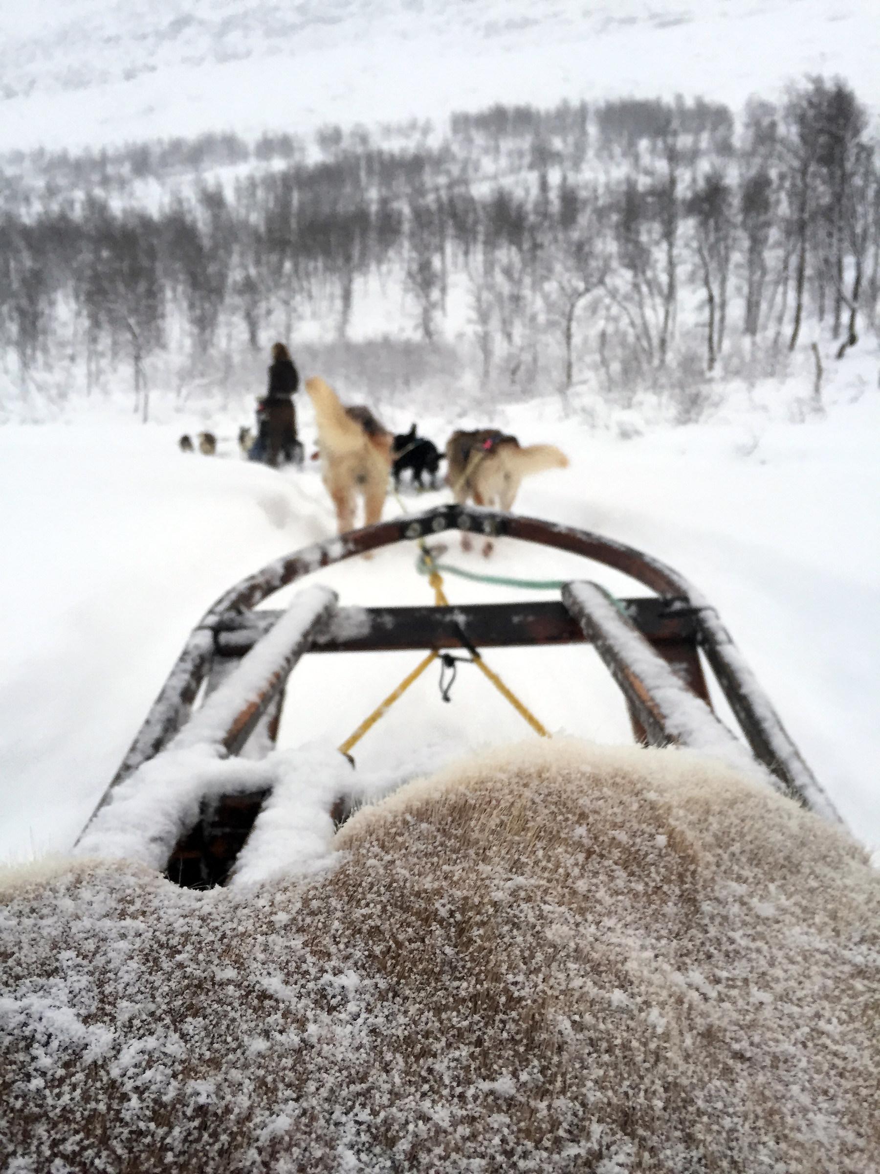 Dog sledding...