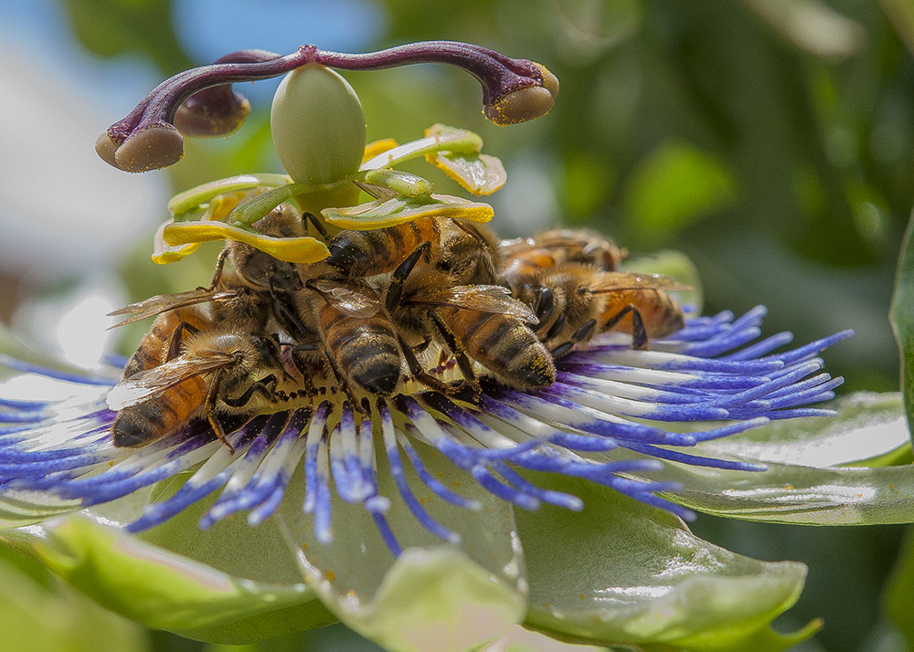 the good pollen .......