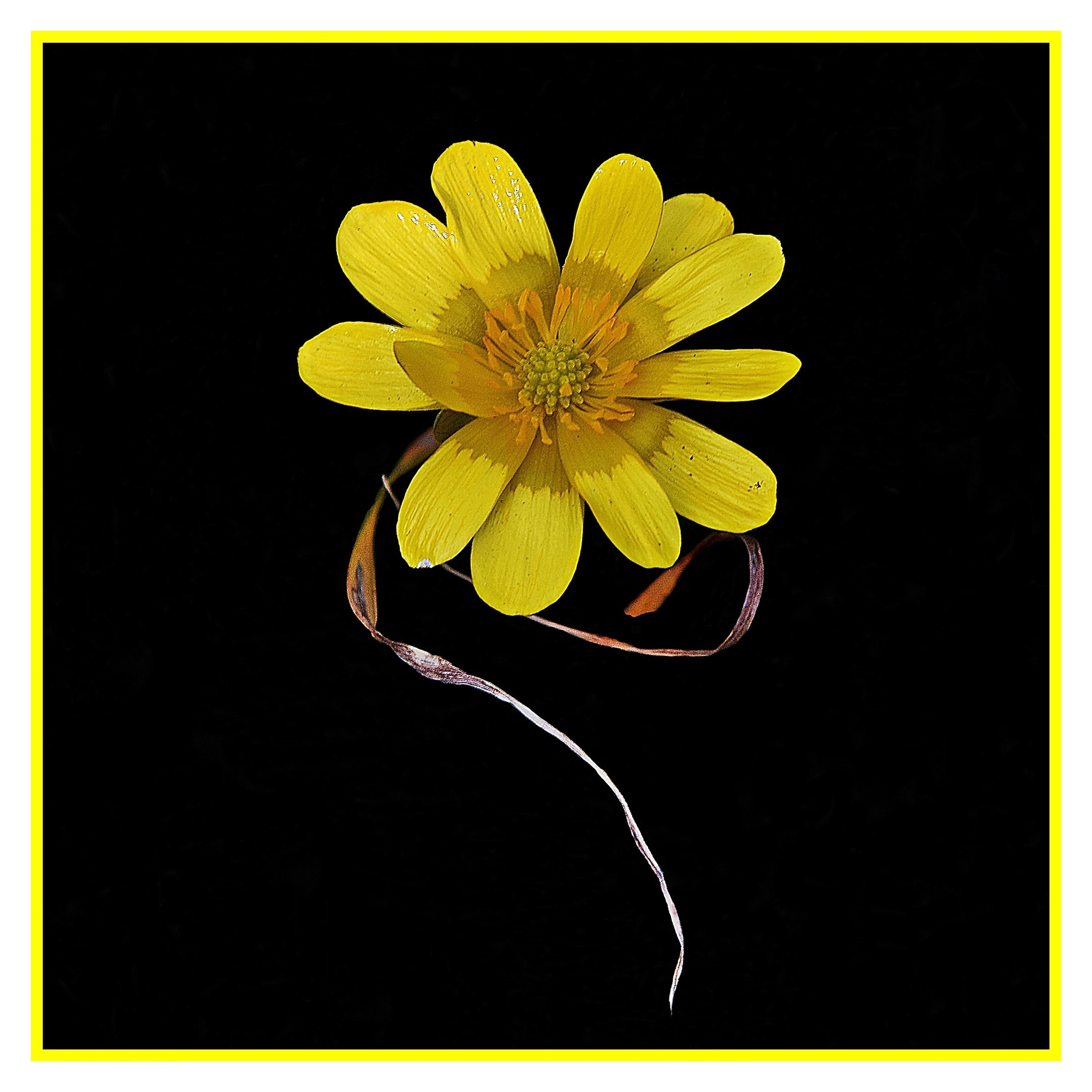 fiore del vento...