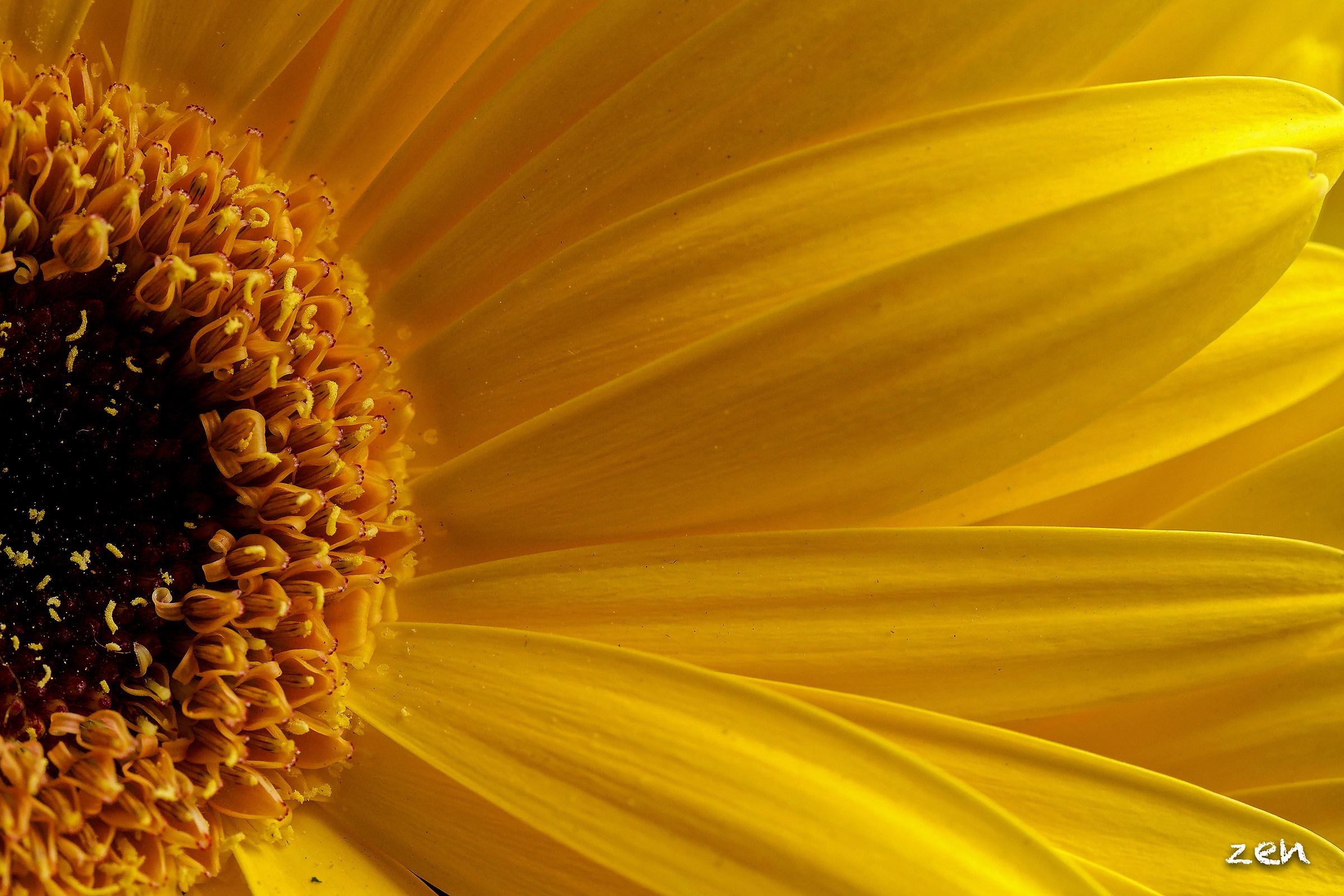 pollen ray...