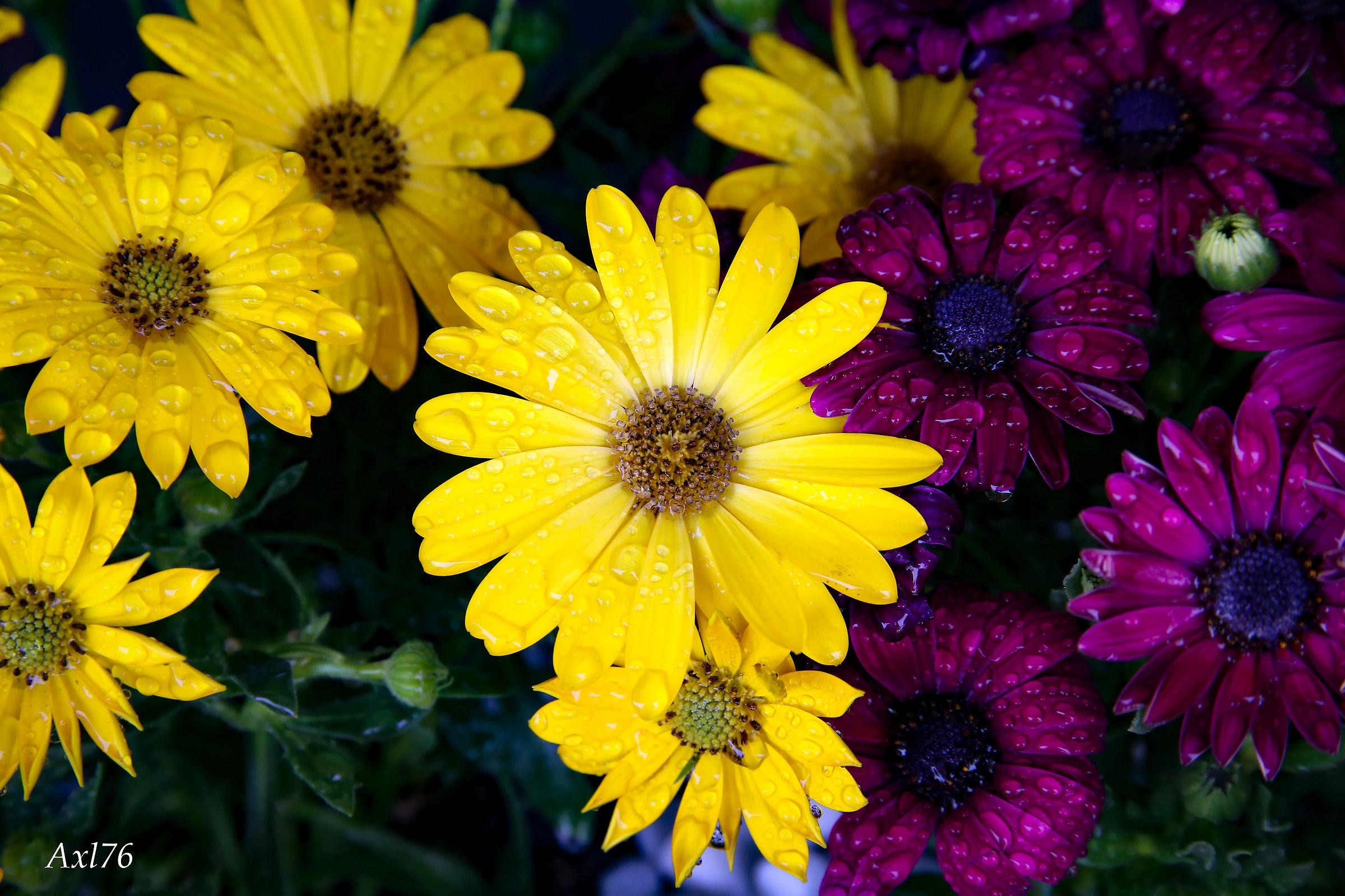 La primavera nei colori...