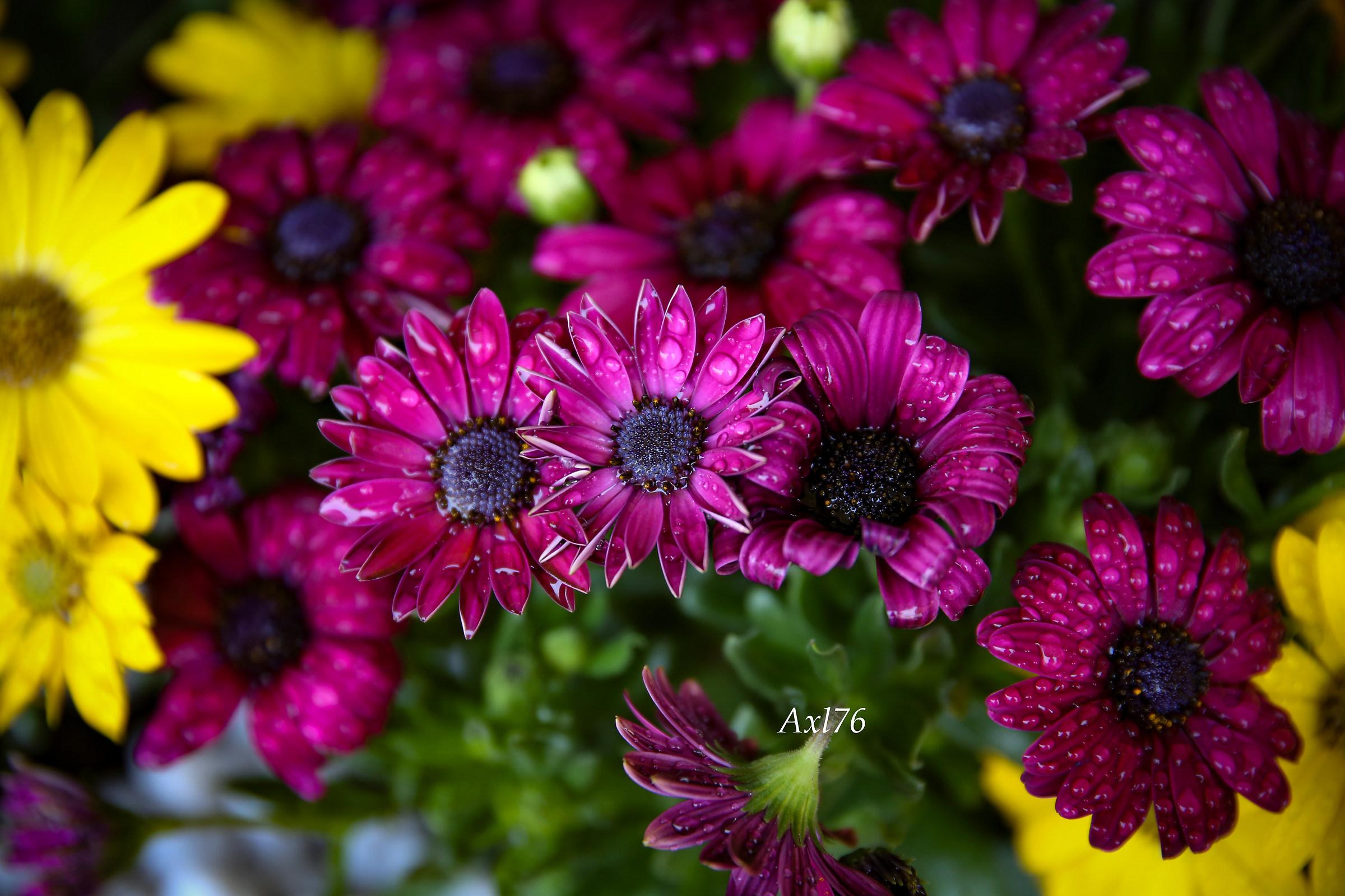 La primavera nei colori 2...