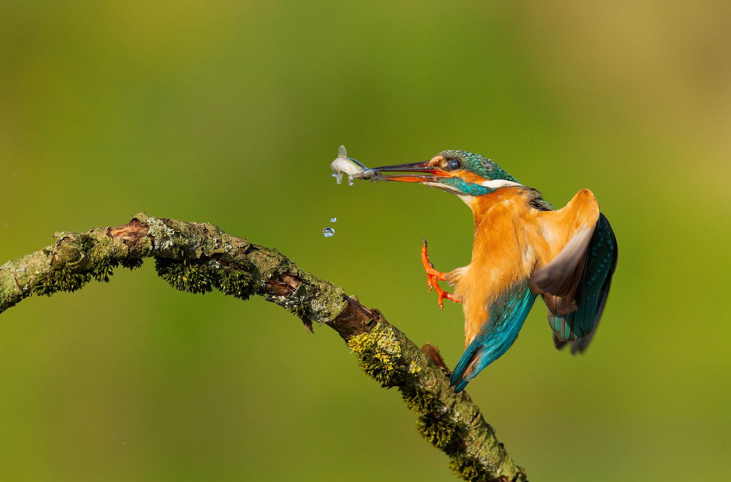 Fresh fish.......!...