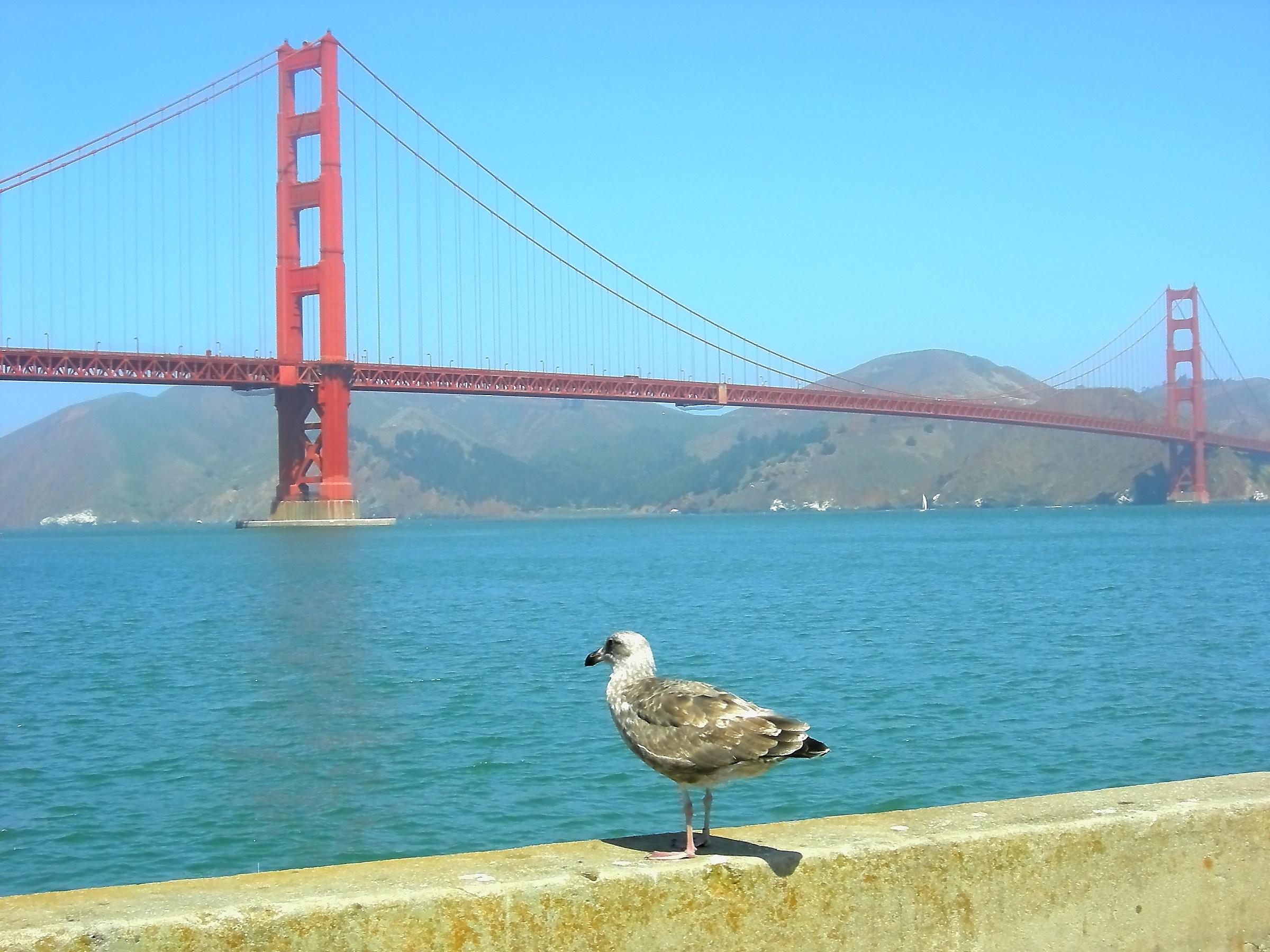 Admiring the Golden Gate Bridge...