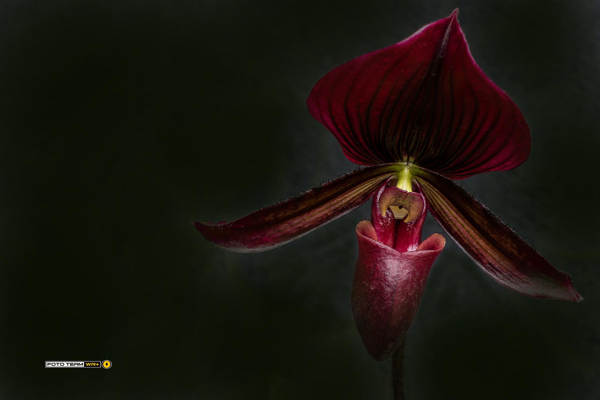 """""""World of Orchids"""" in Gargazzone 2017..."""