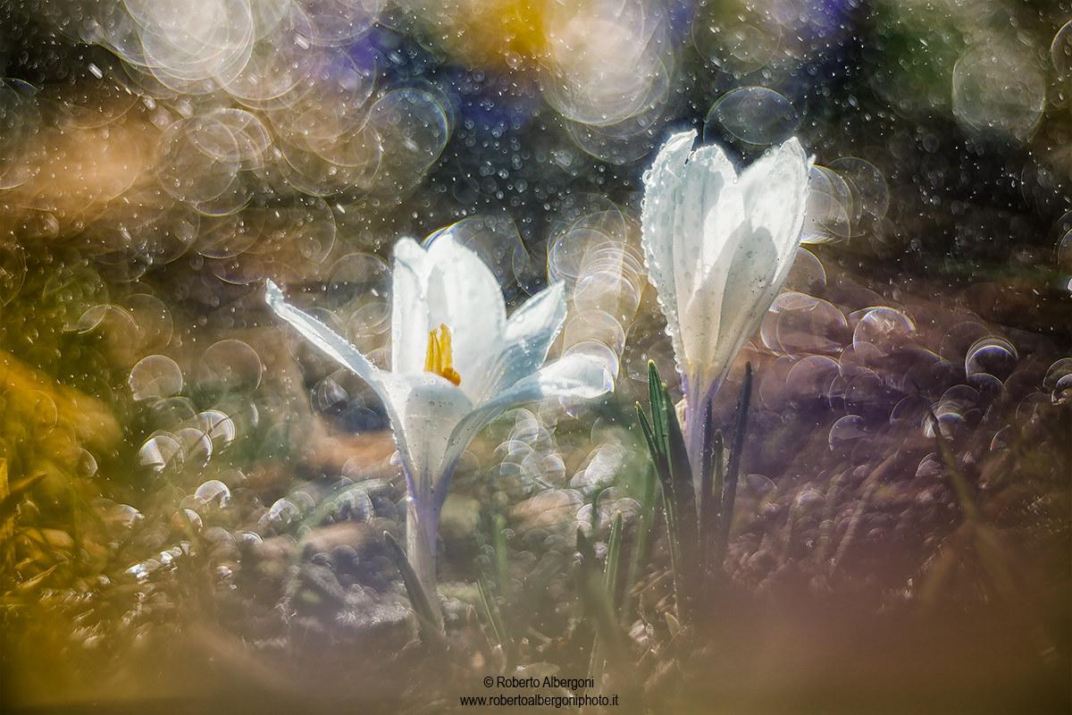 Enchanted drops...