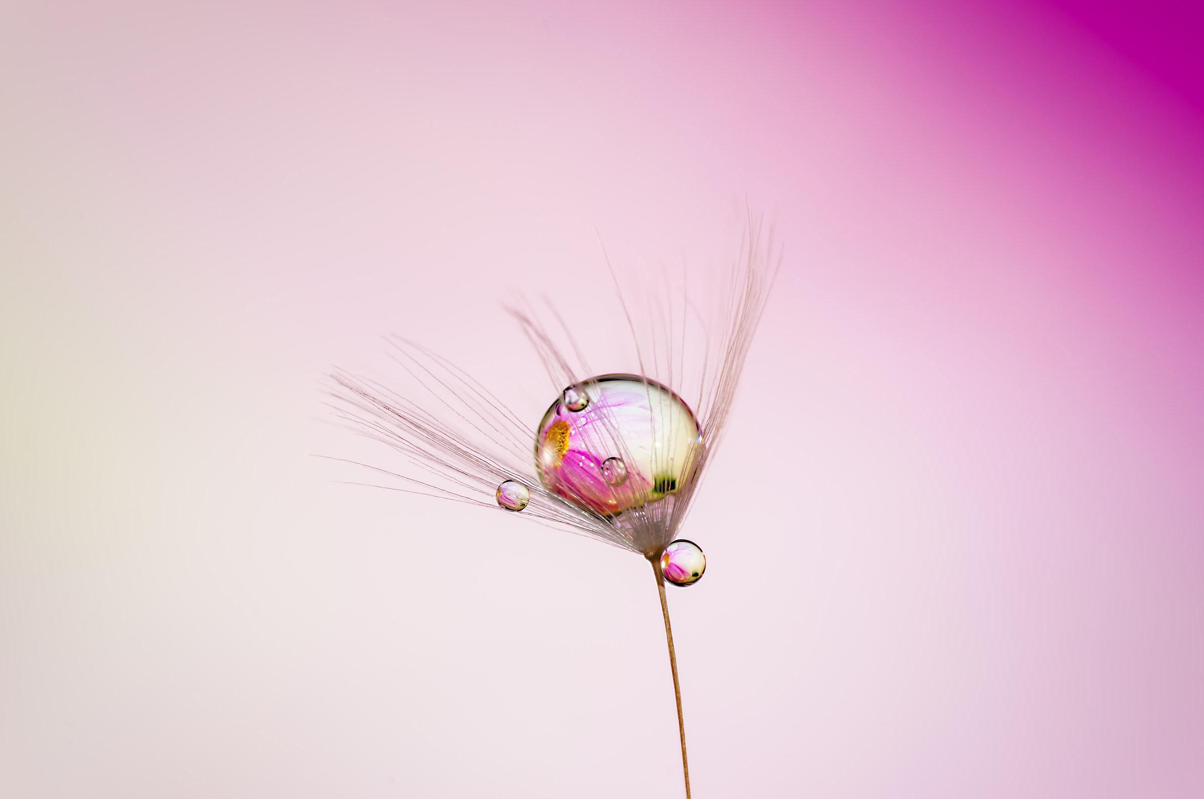 Drops & flowers - gocce e fiori in macrofotografia...