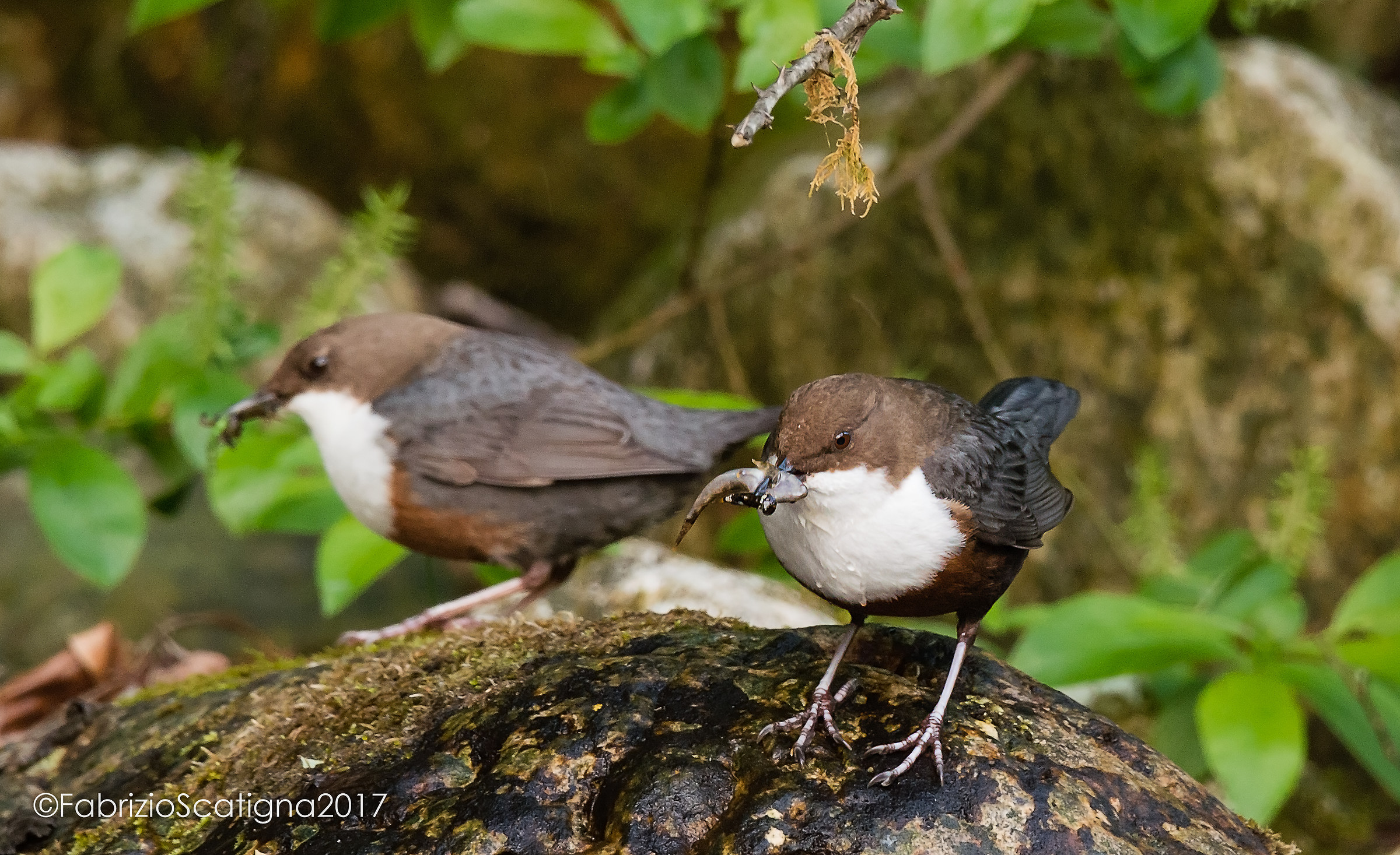 dippers...