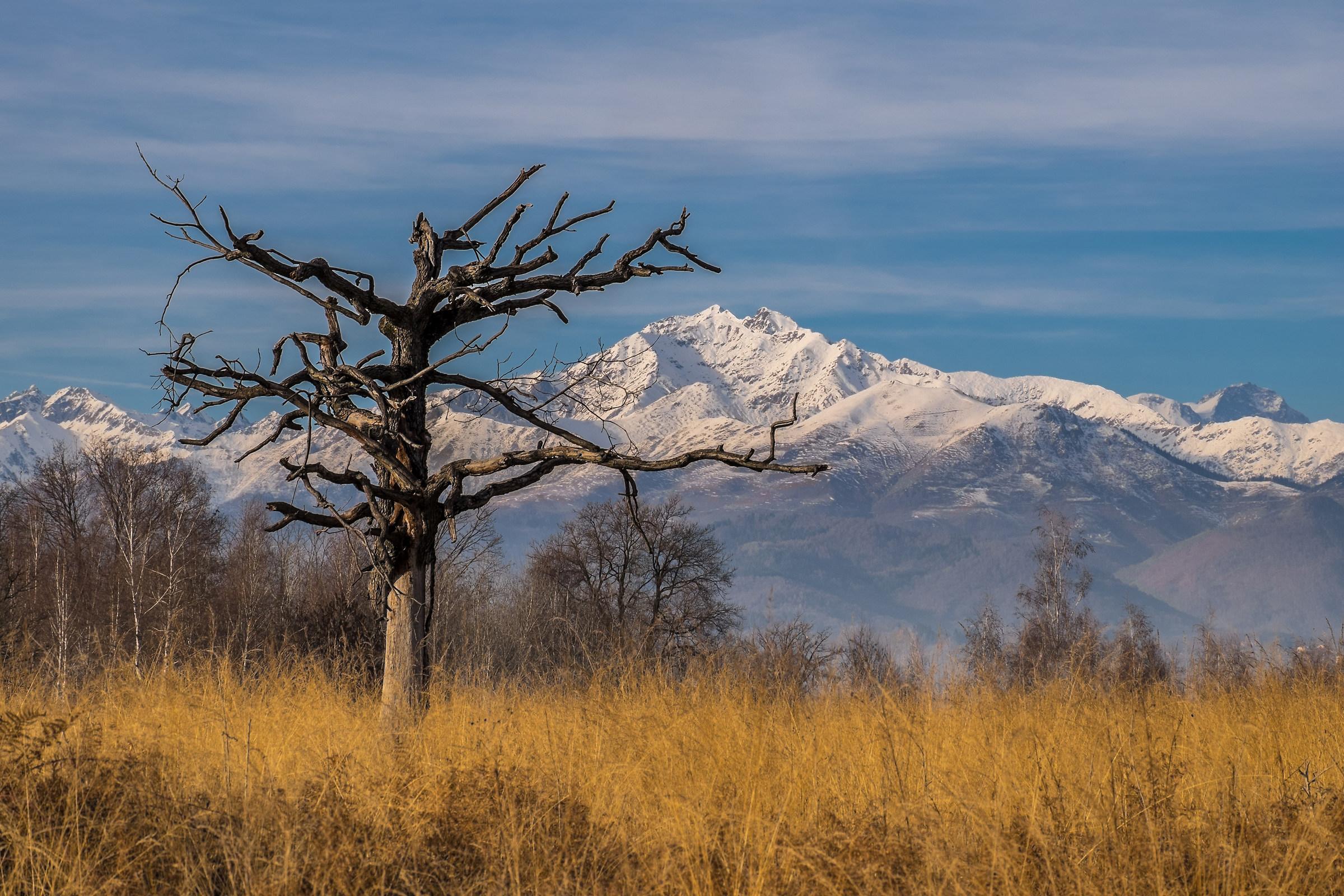 La savana africana in Piemonte...