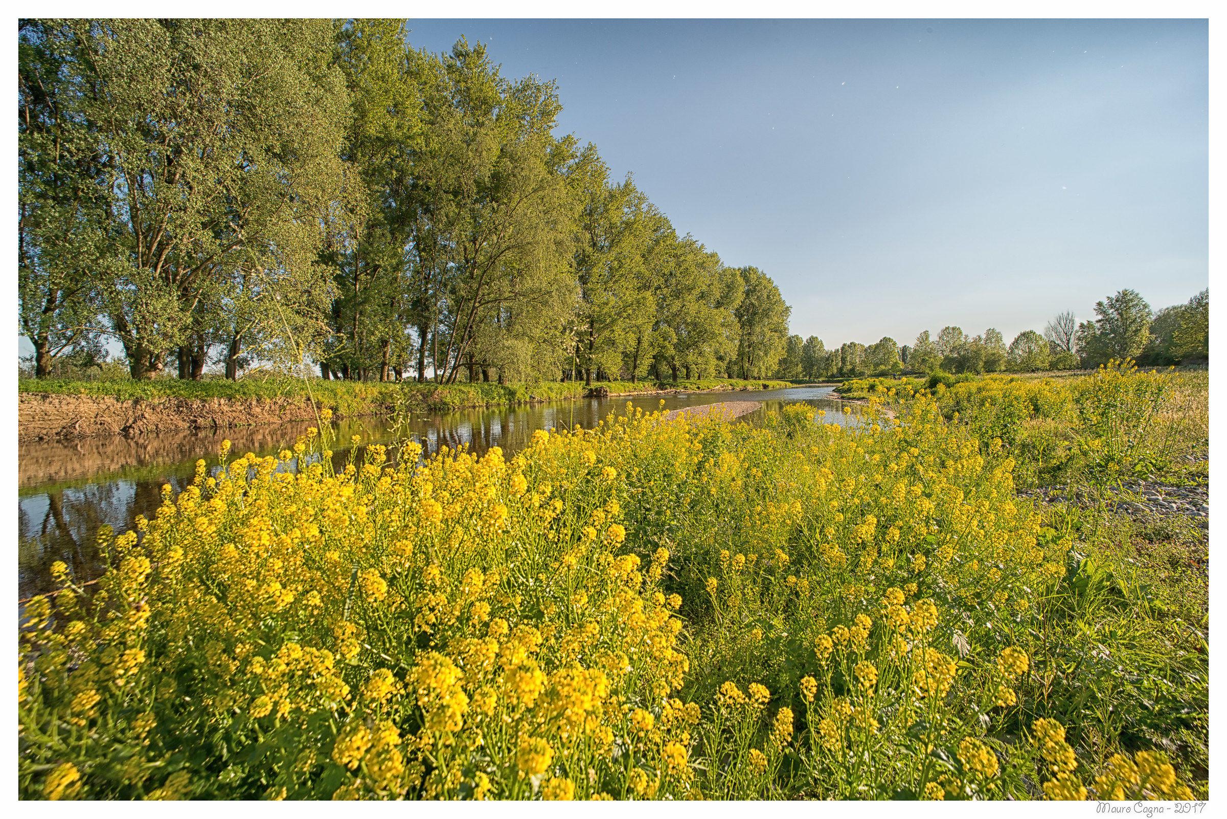 Primavera lungo il fiume...
