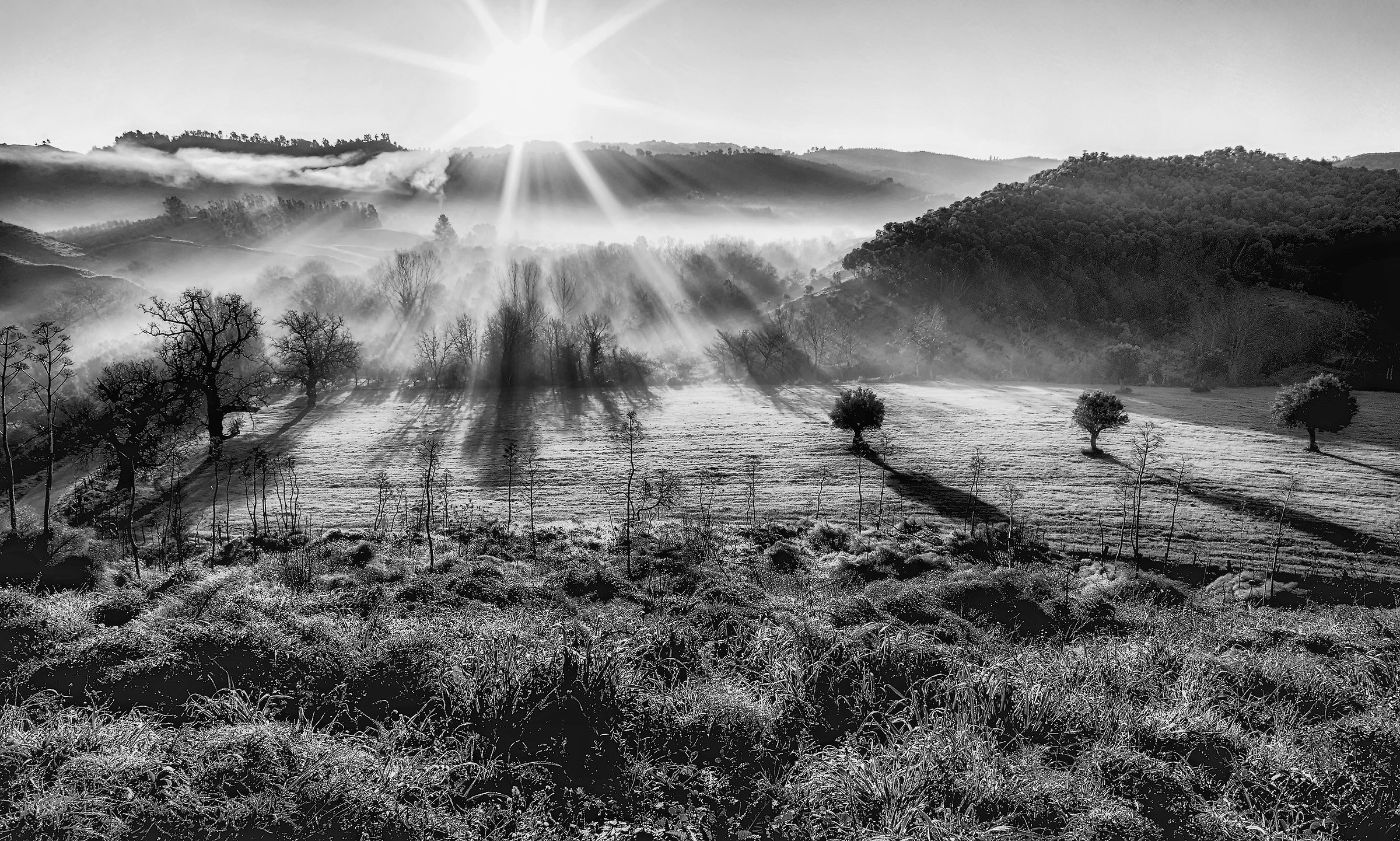 Shadows and Fog in the country!...