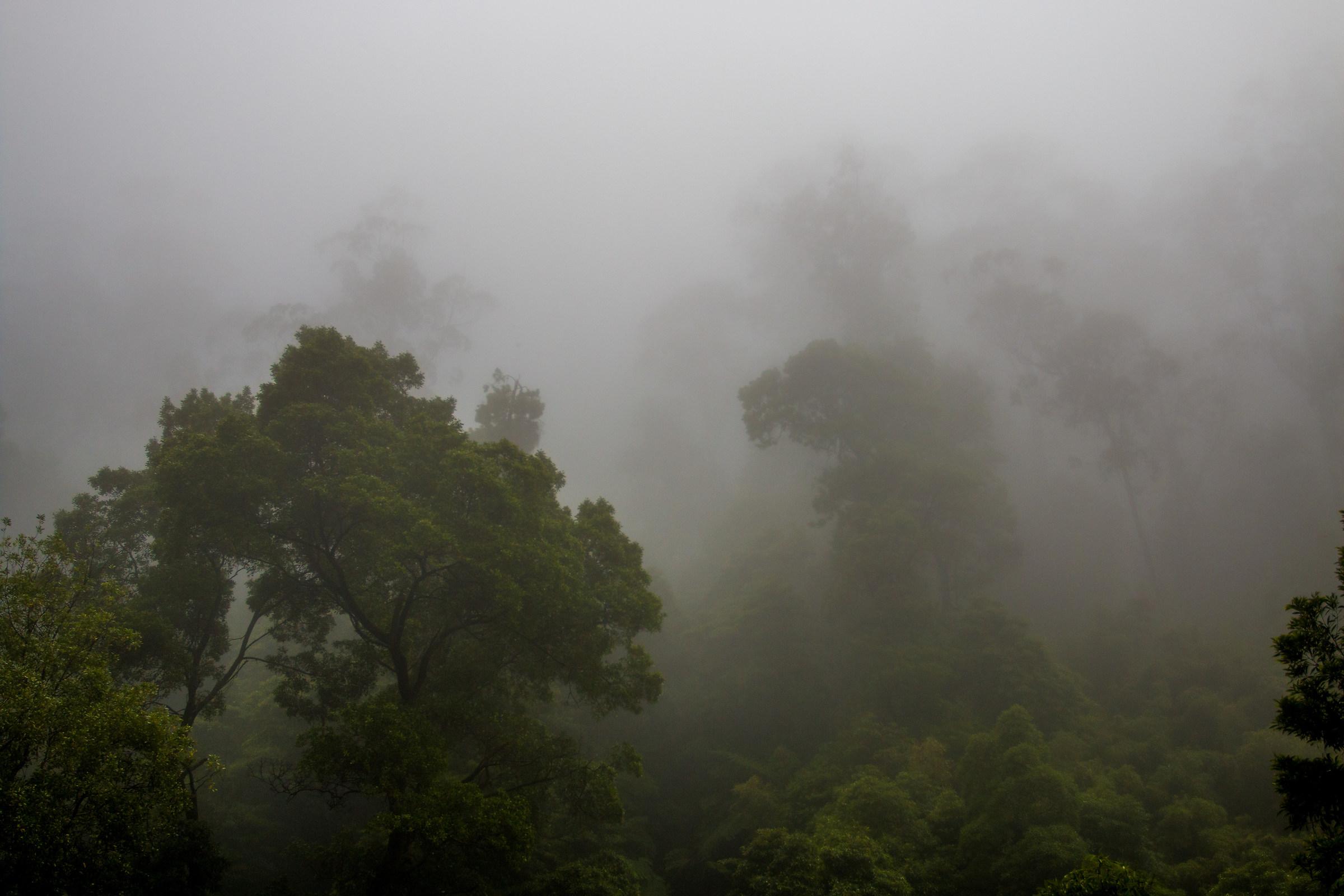 Giants in the fog...