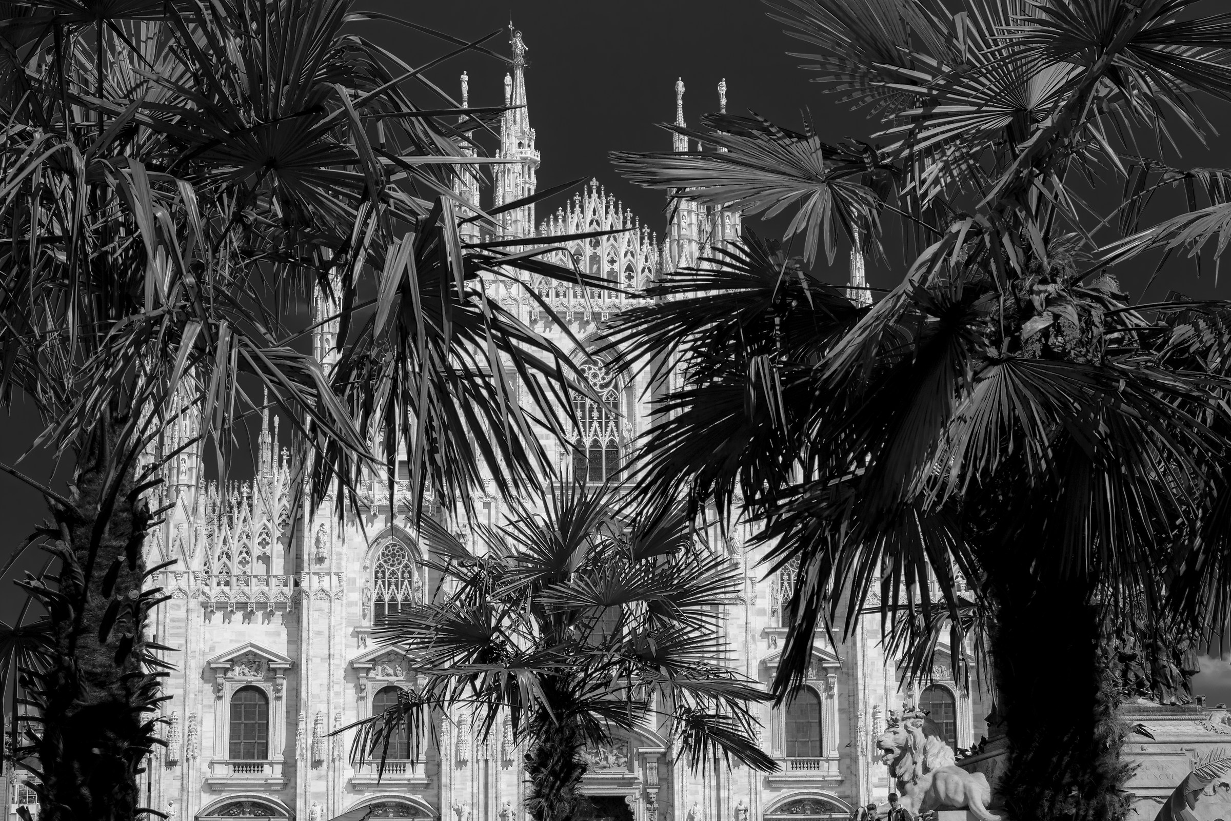 Palms' spring...