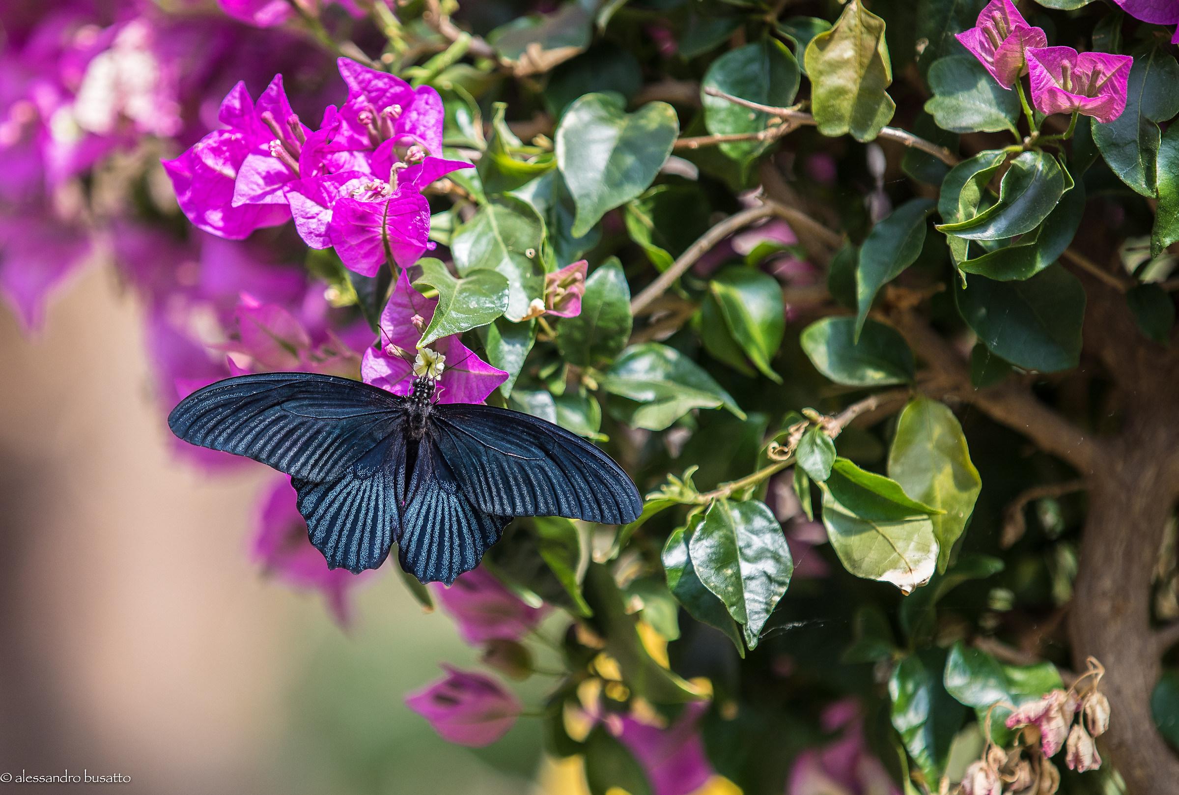 Butterfly 2...