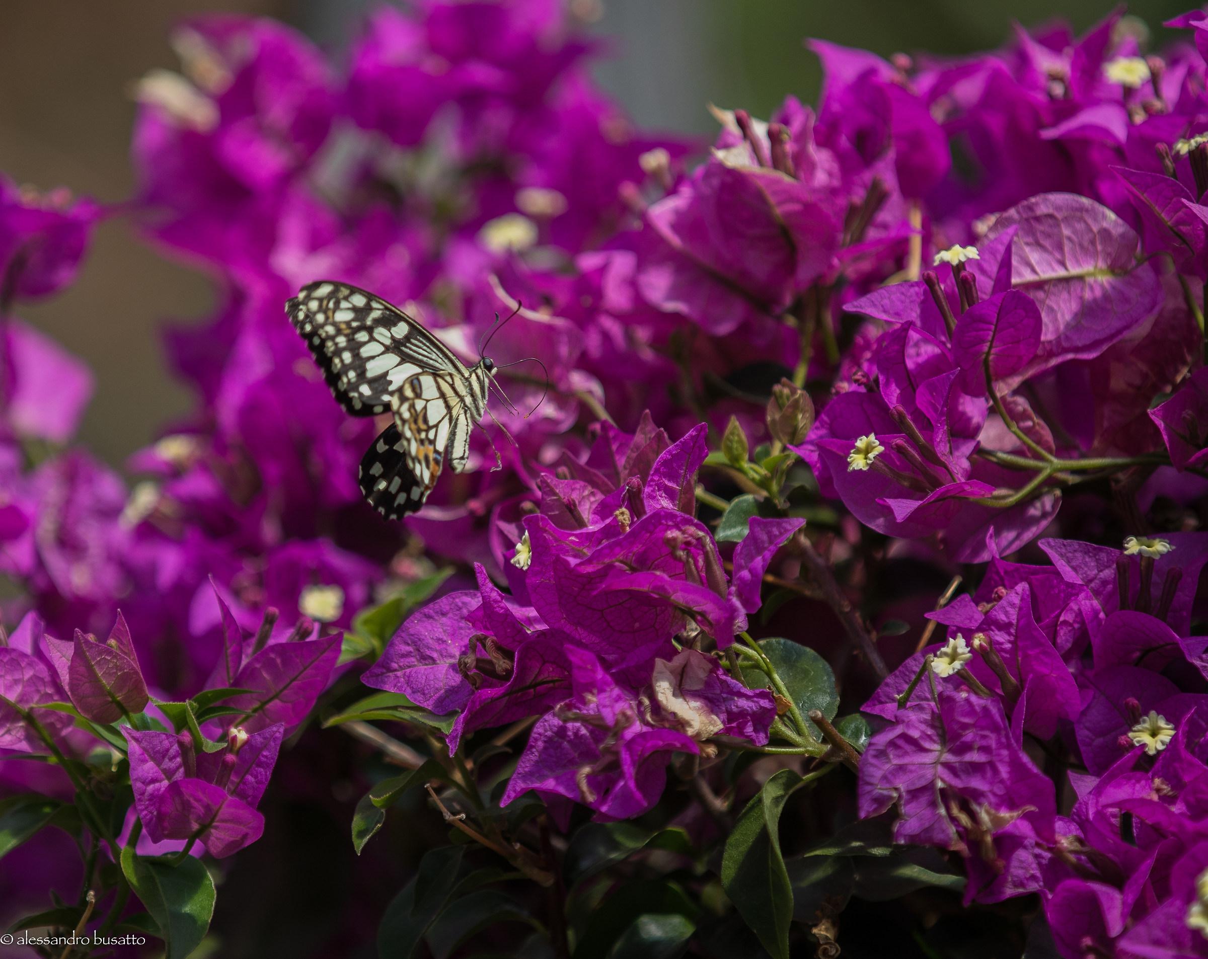 Butterfly 3...