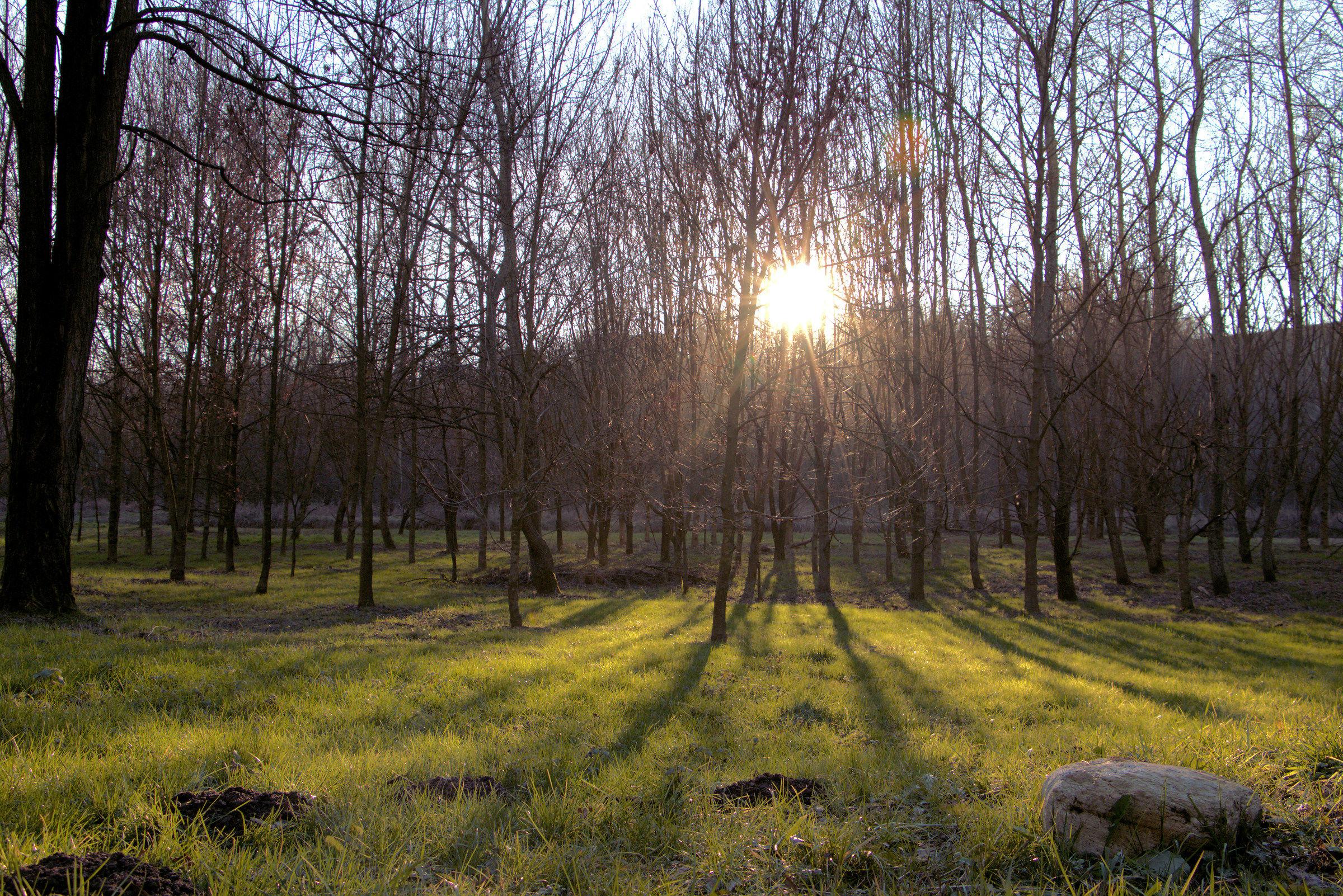 light among the trees...