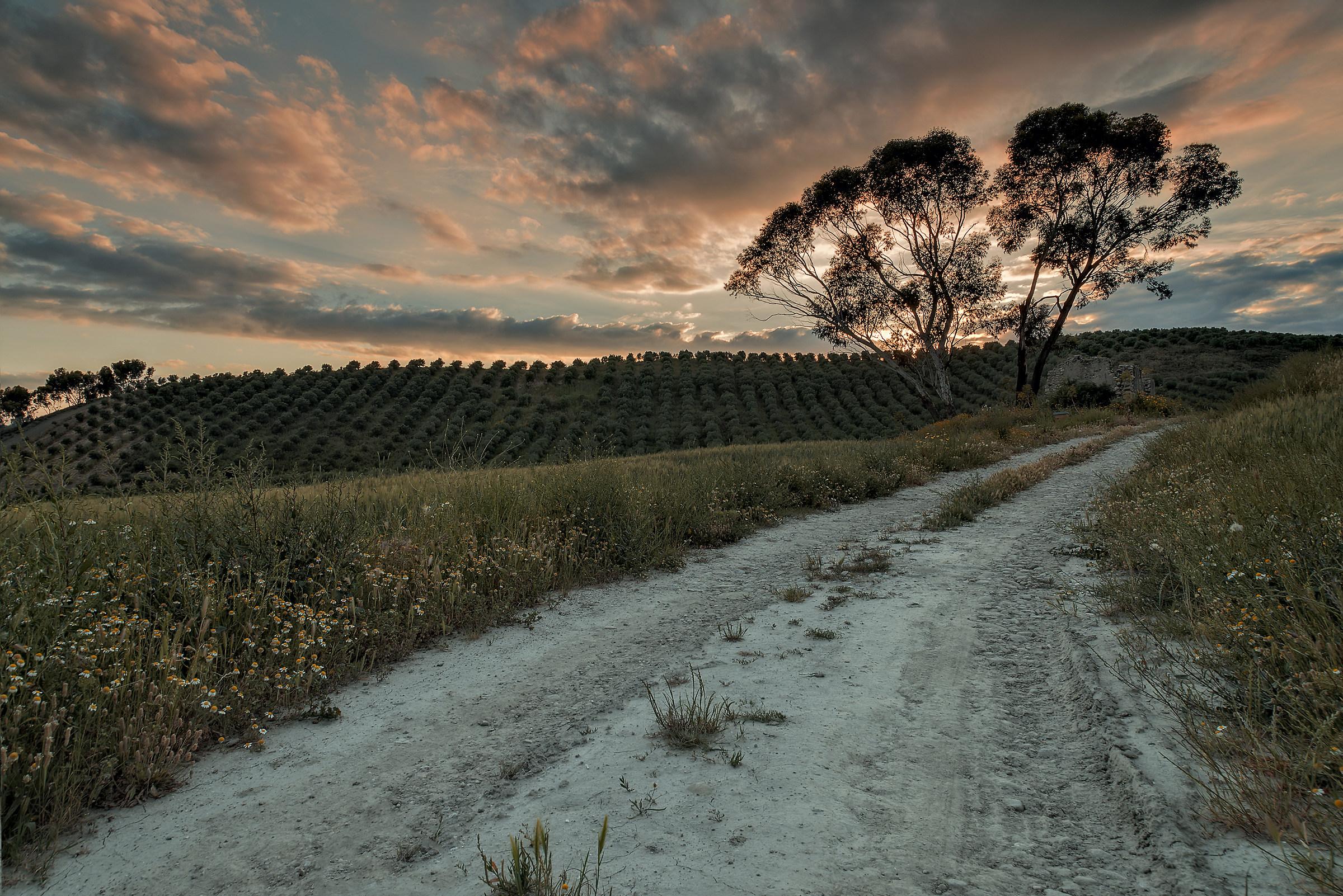 La strada di campagna!...