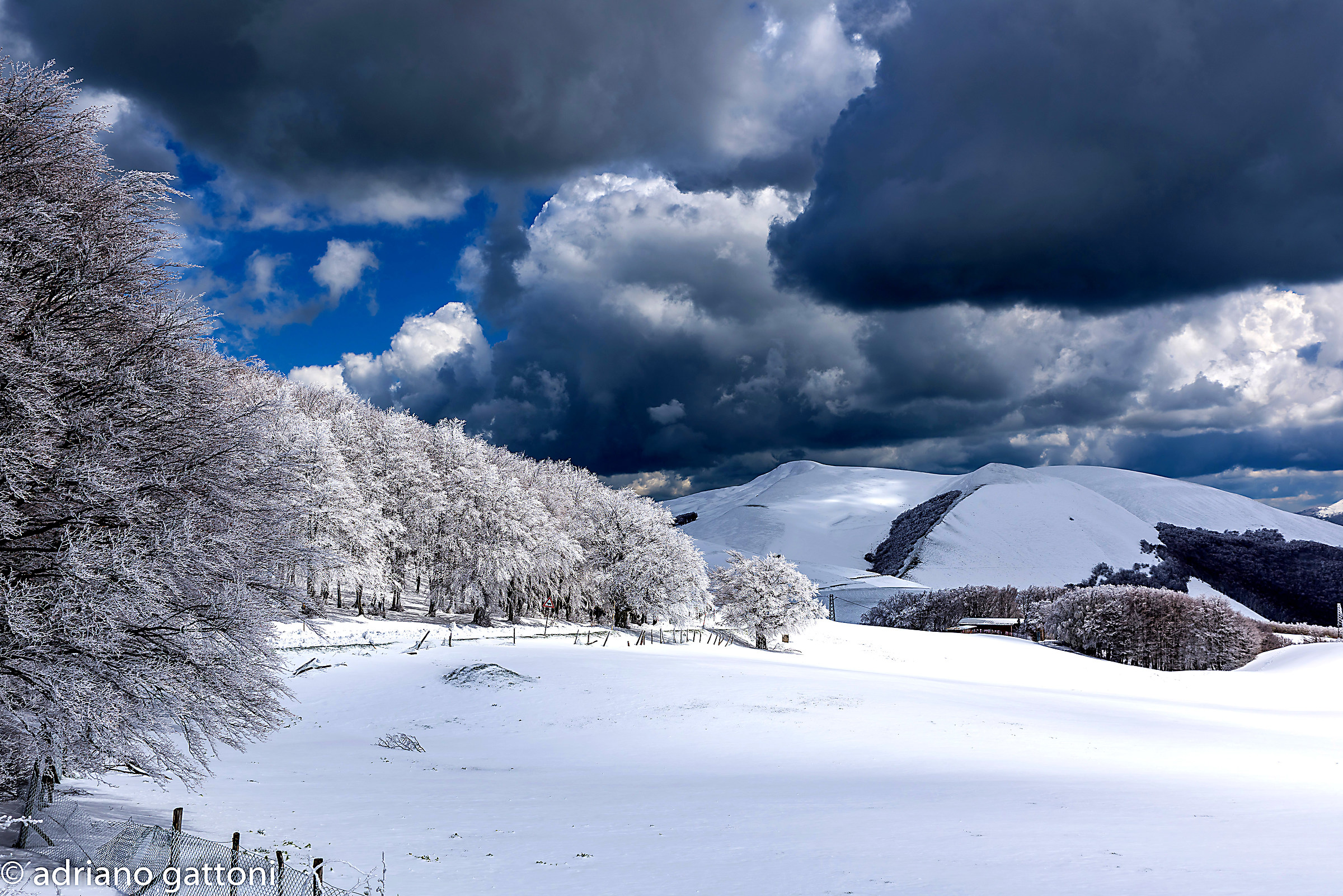 Spring snow...