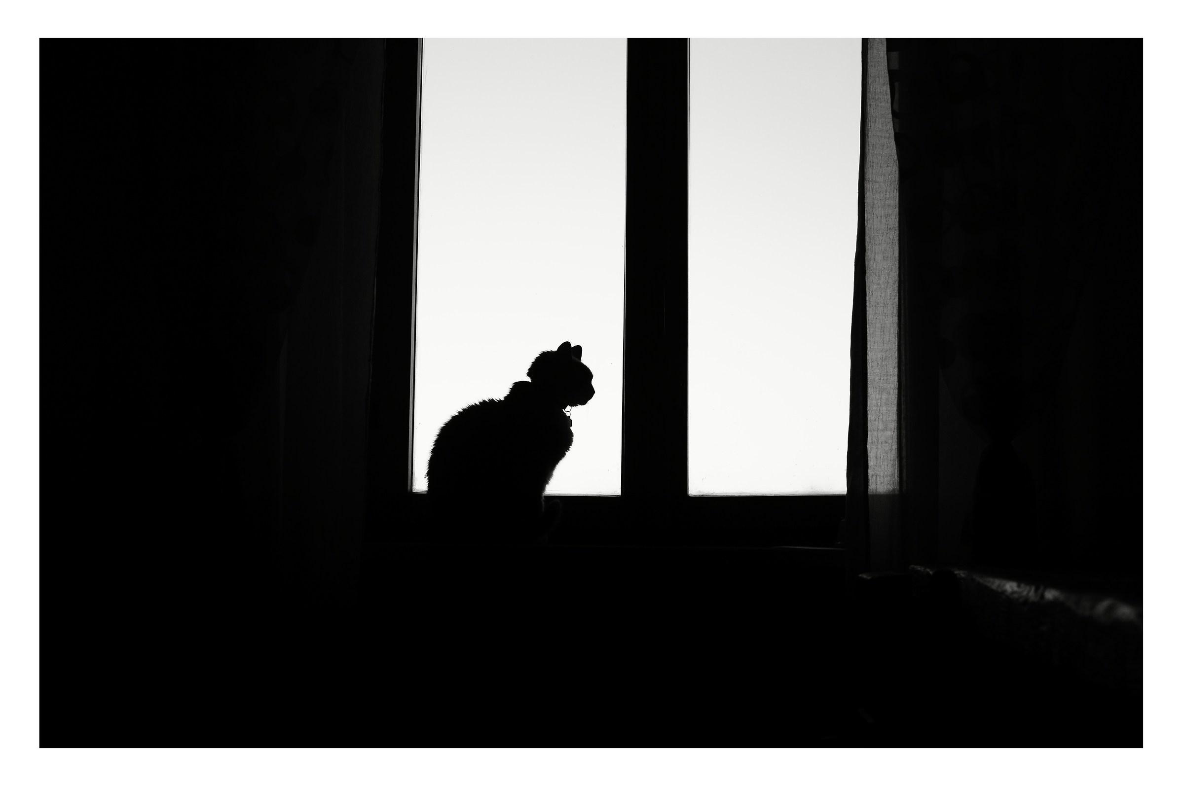 silhouette...