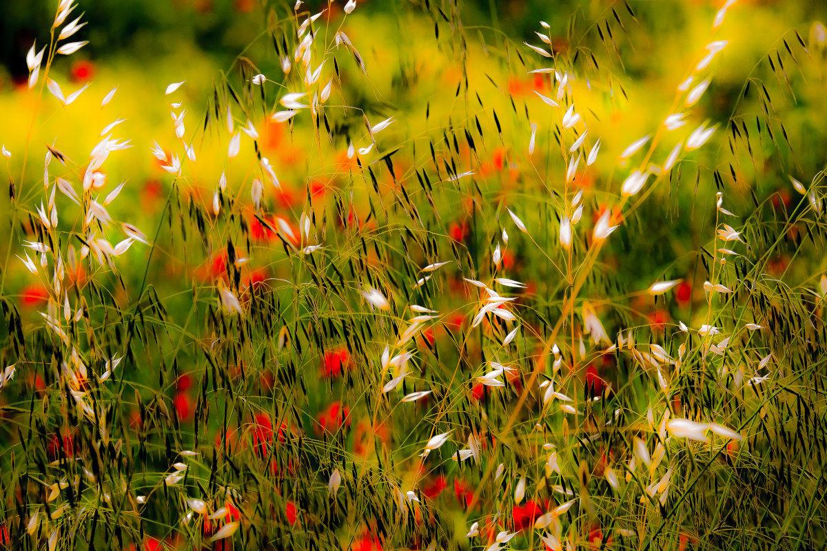 Spring splashes .....................