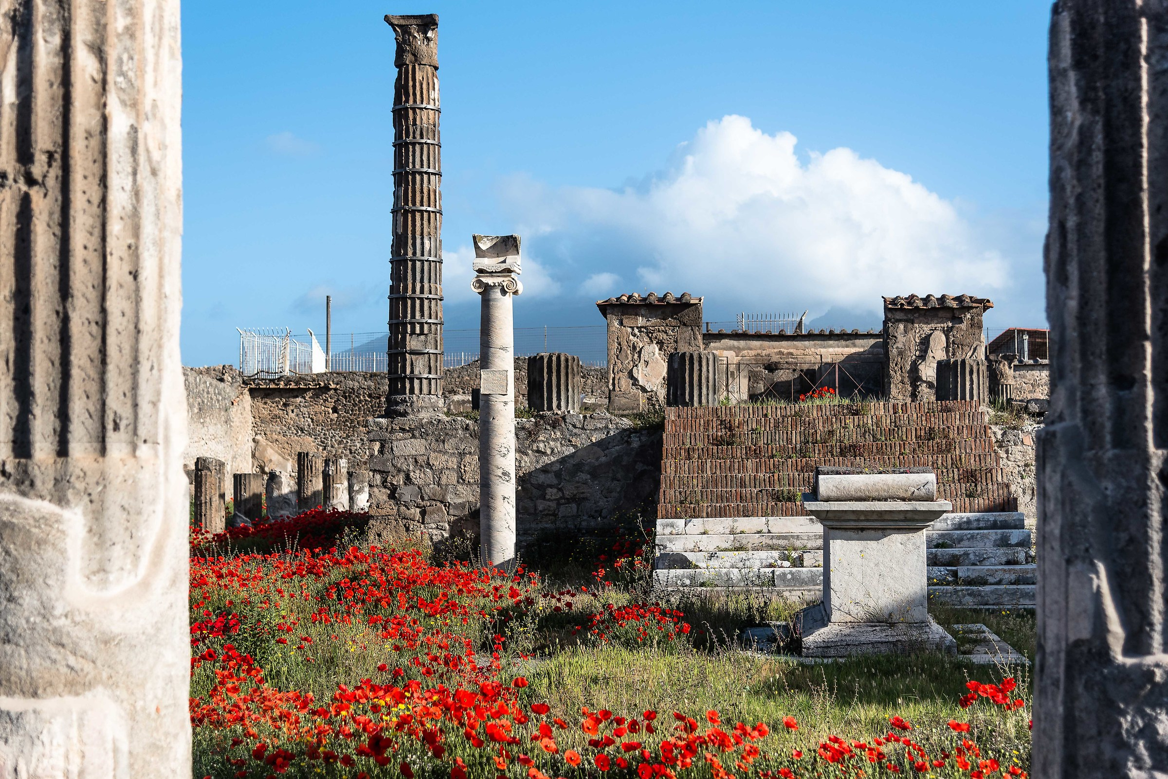 Excavations and poppies...