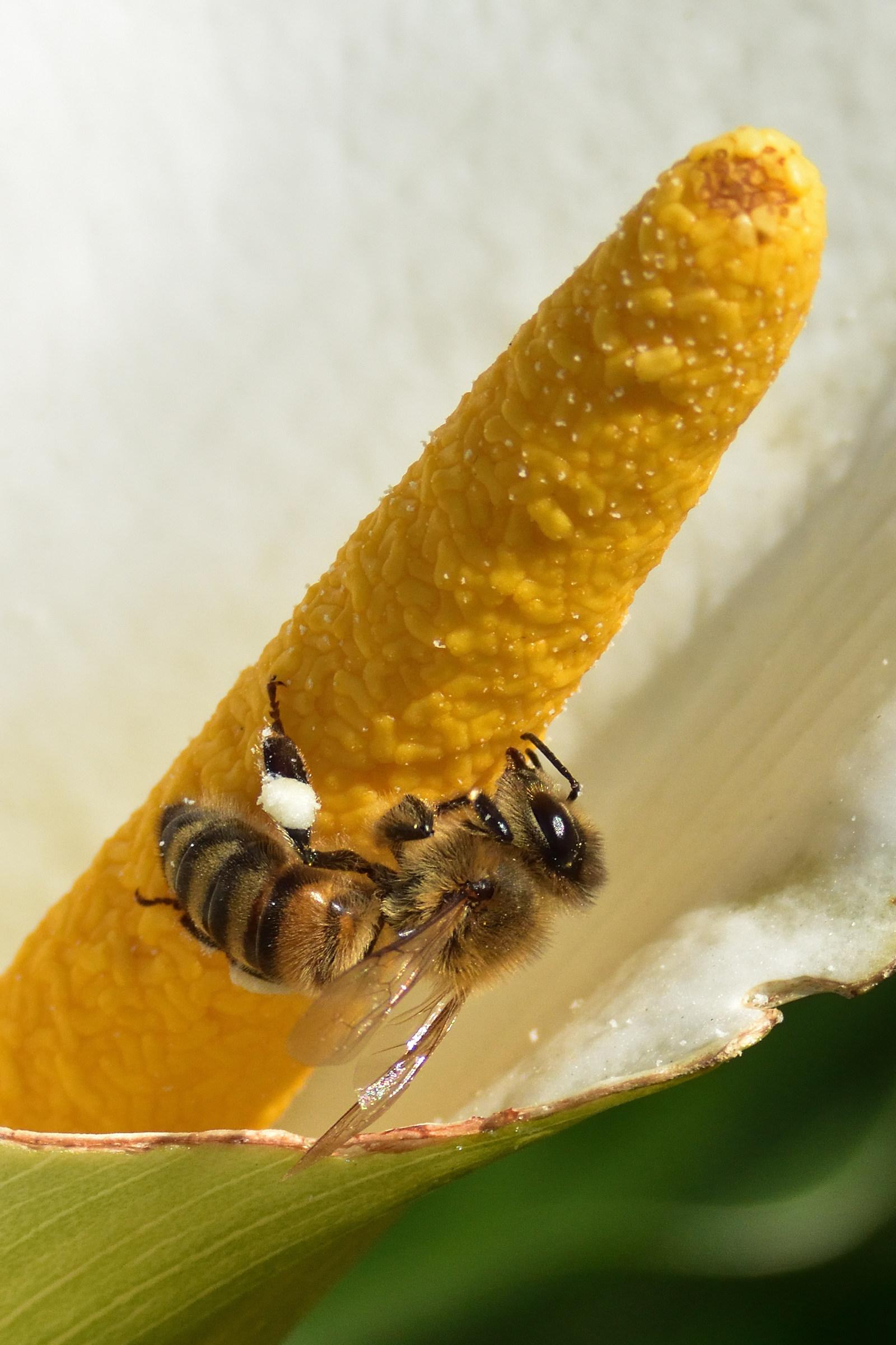 The Nectar...