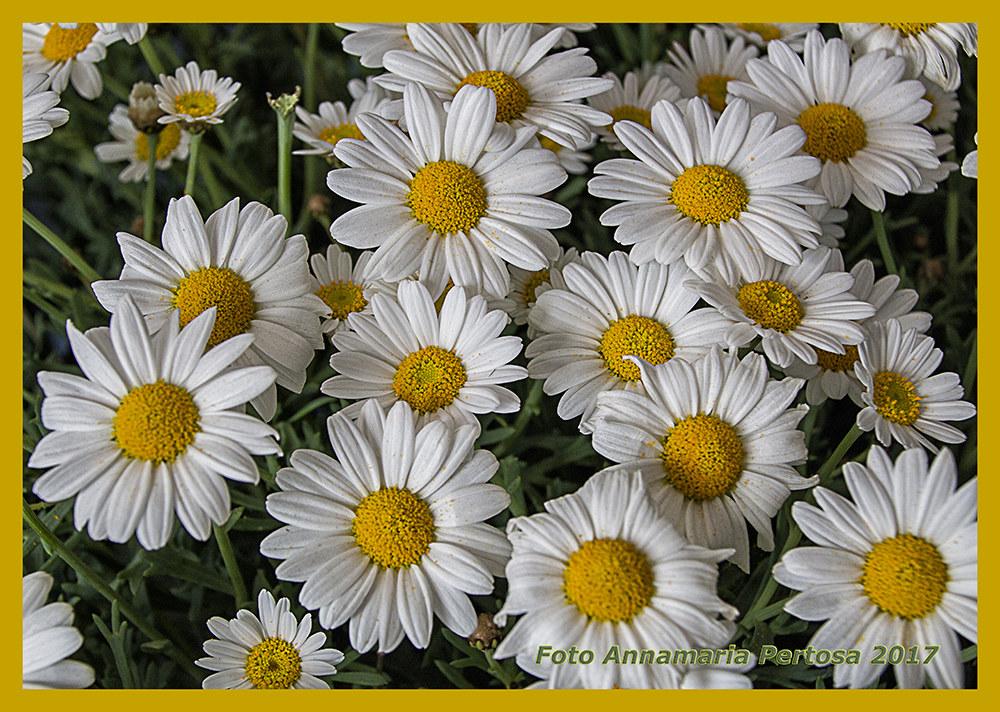 I look at a daisy! ......