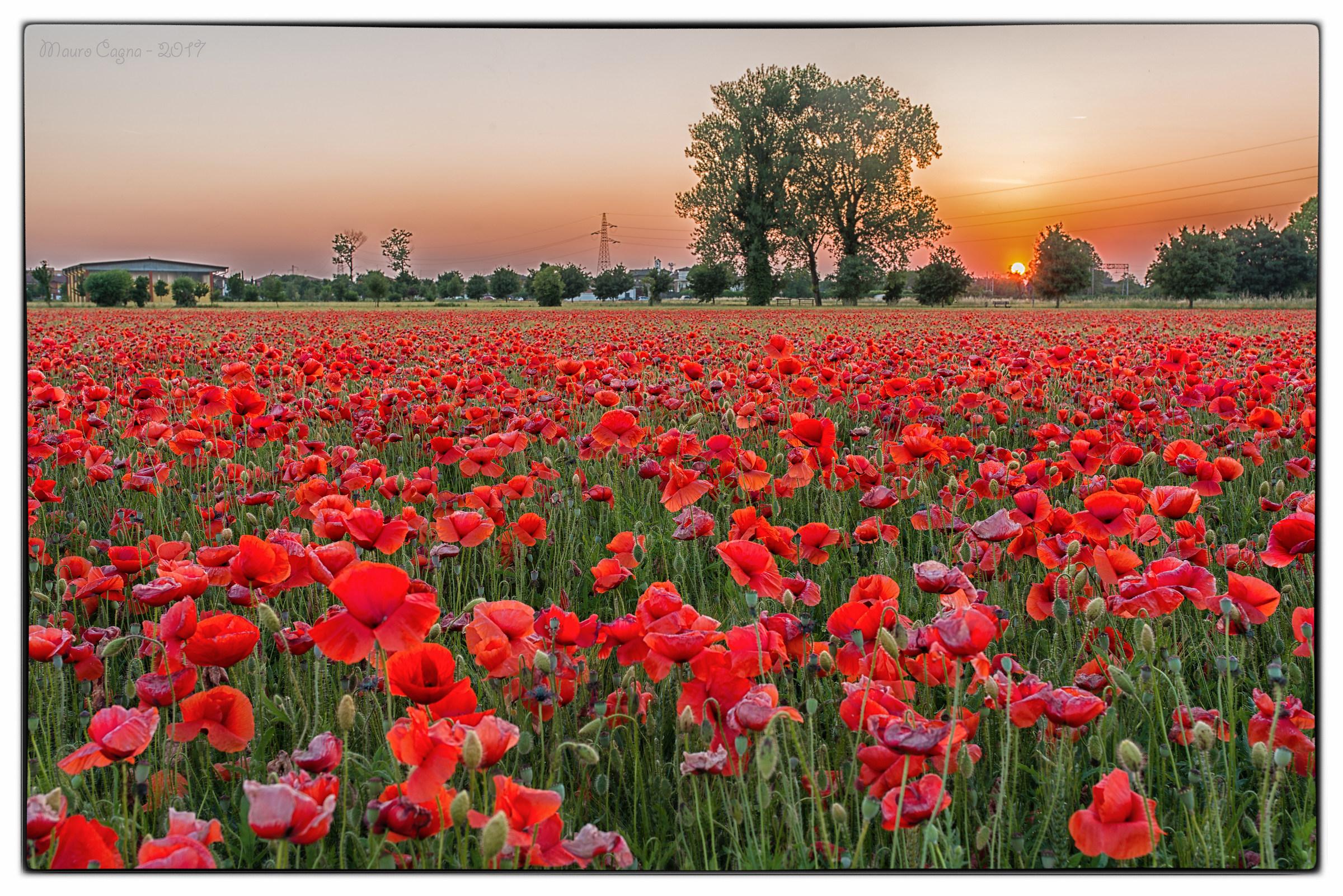 Tappeto rosso al tramonto...