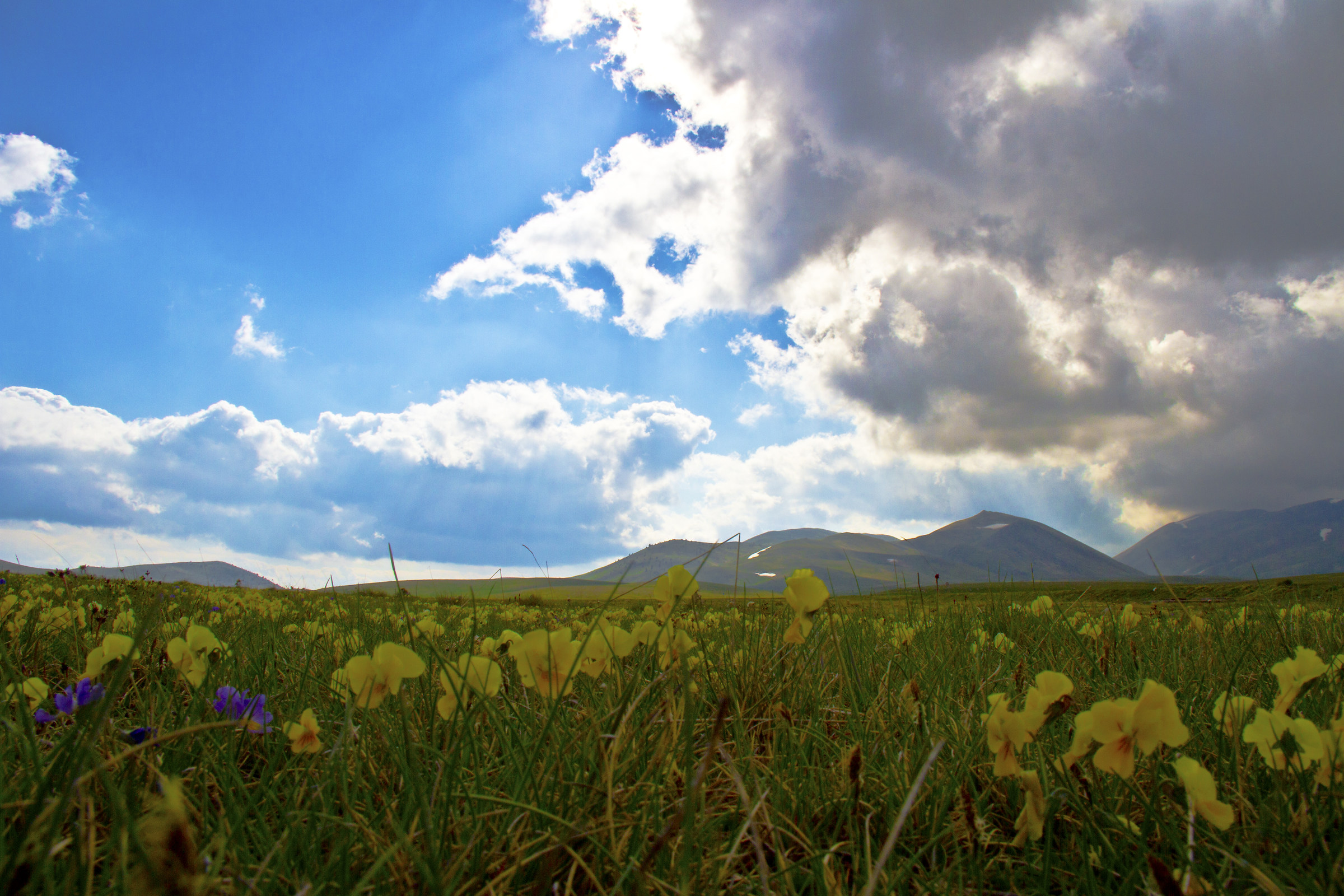 On the ground of Campo Imperatore (aq)...