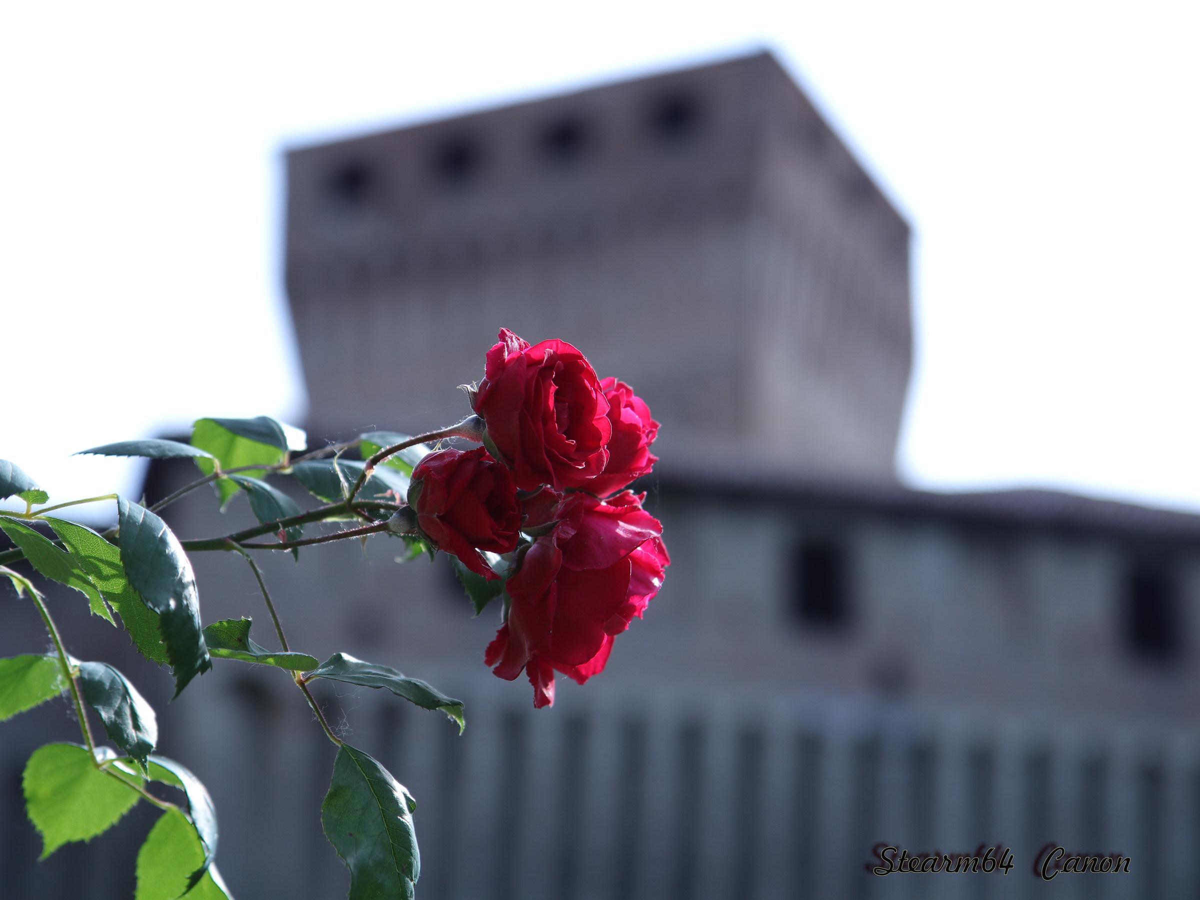 Montechiarugolo Castle...