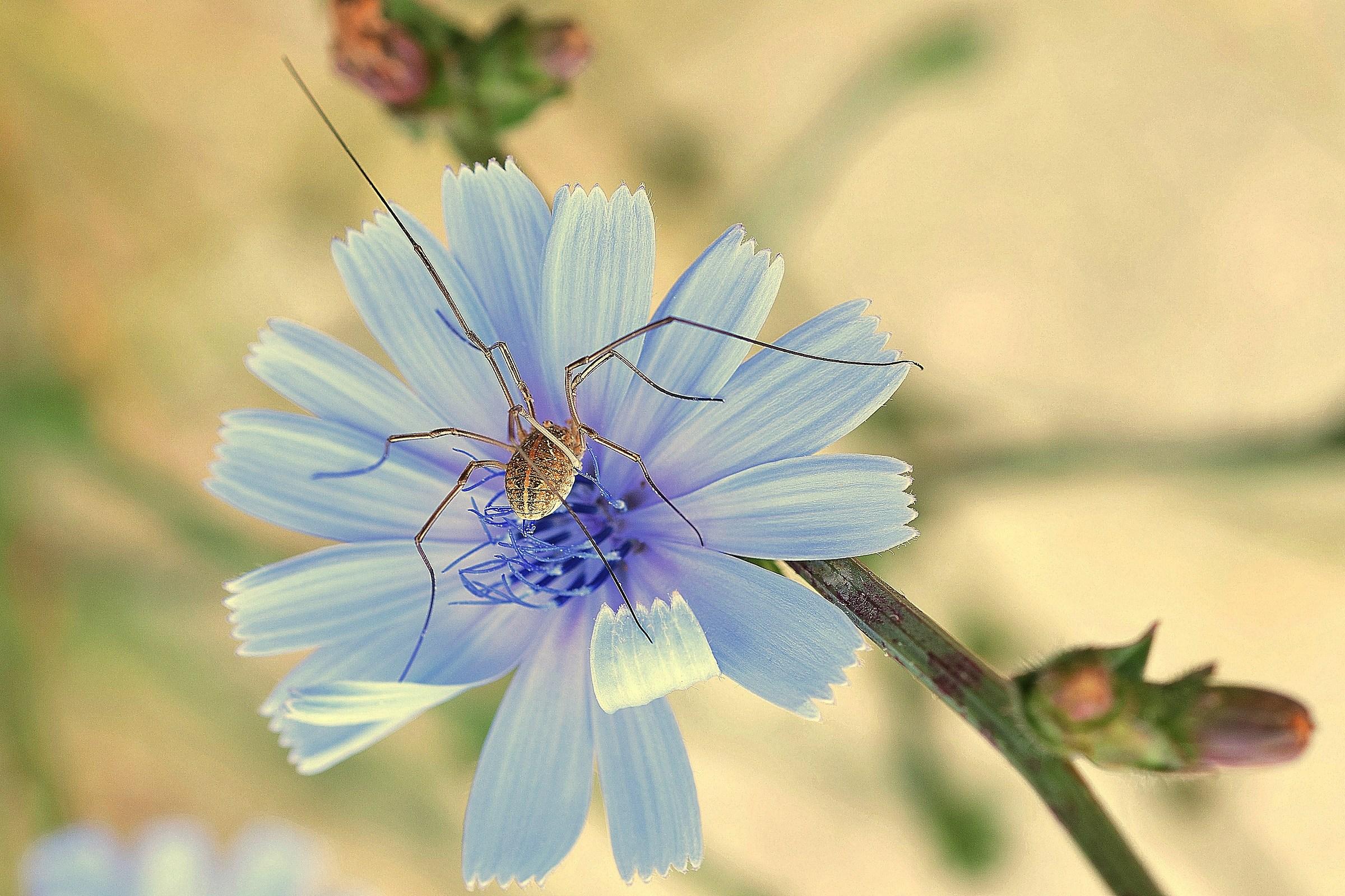 fiore di campo...