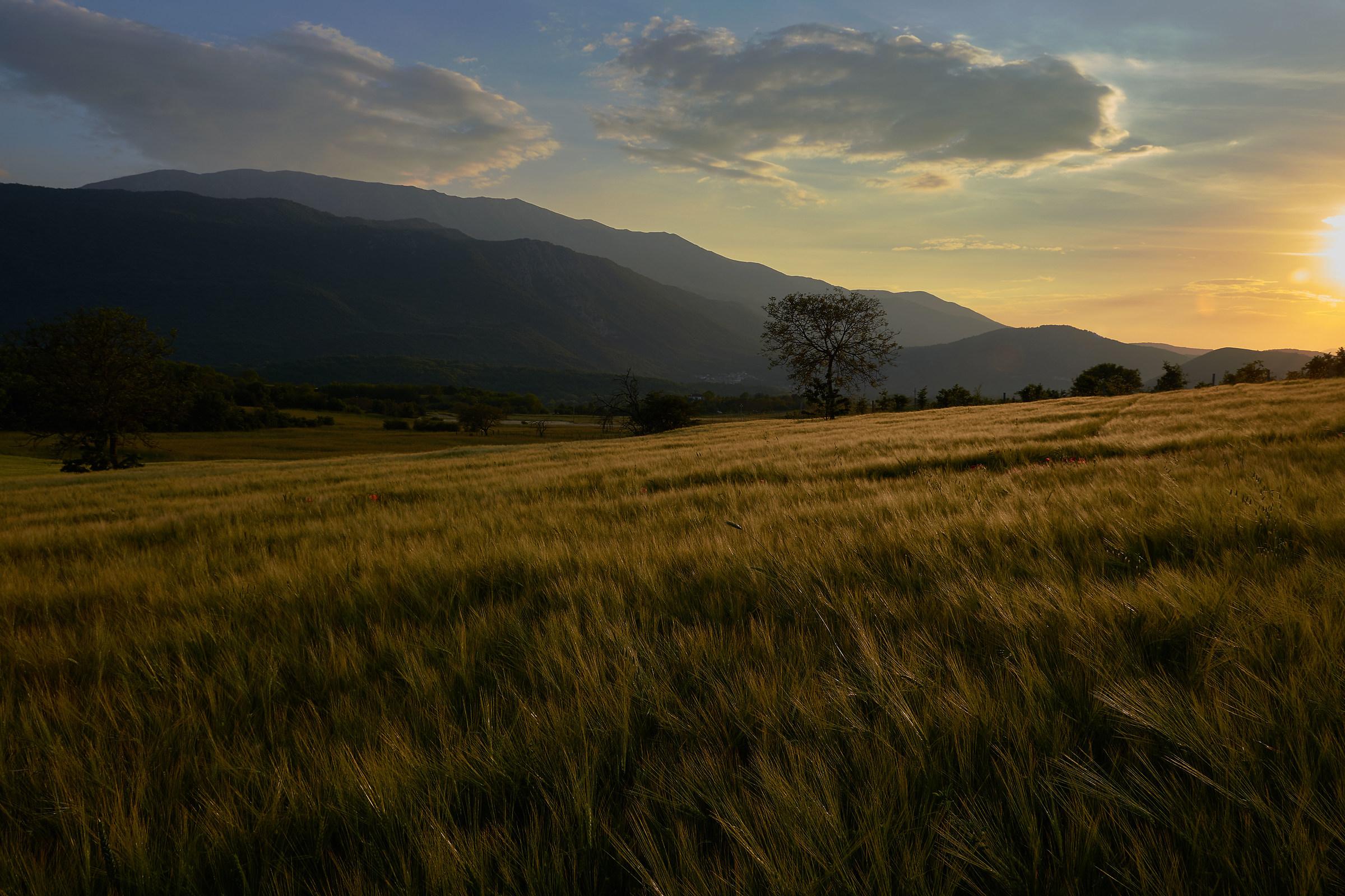 Grain fields at sunset...