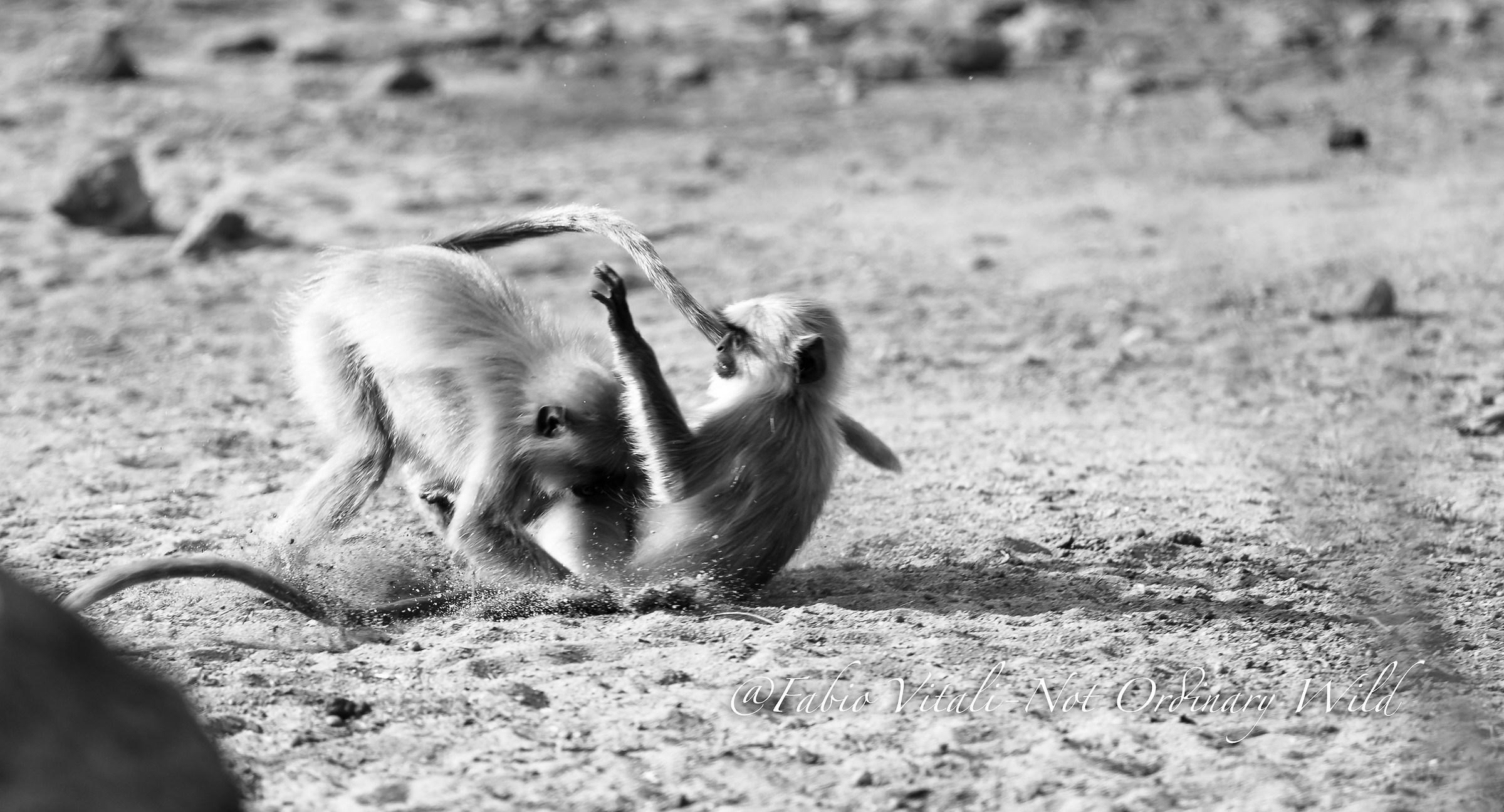 Playful monkeys...