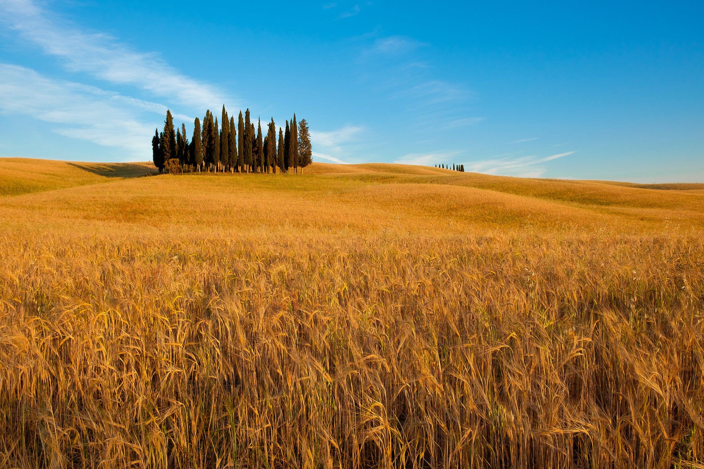 Tuscan gold...