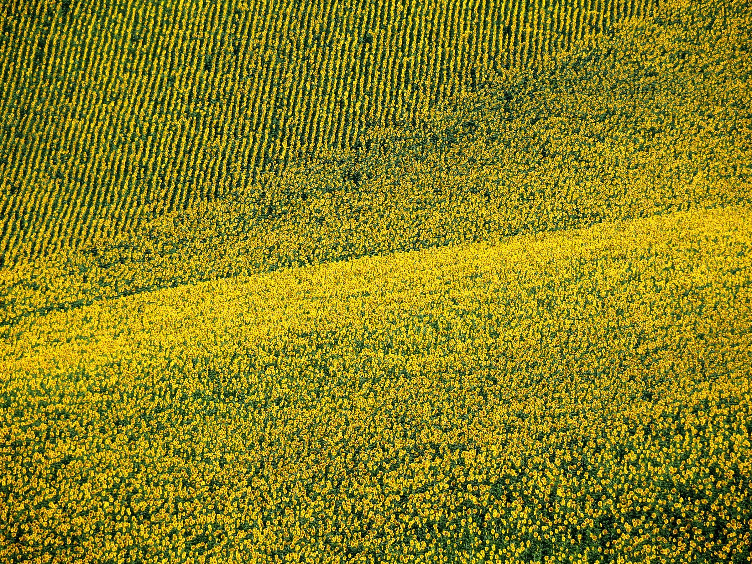 Swaying yellow...