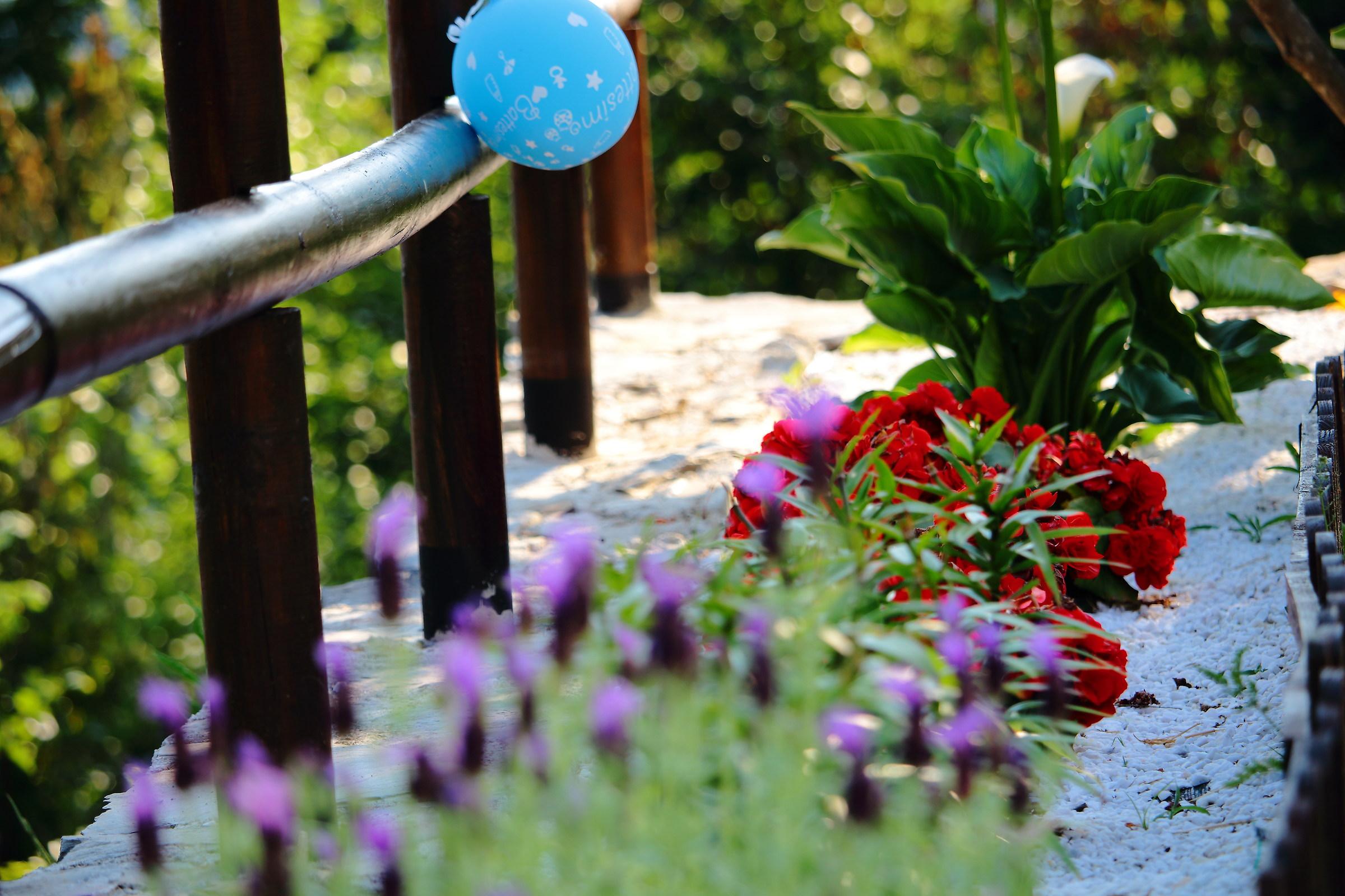 Exercise of focus in the garden zen...