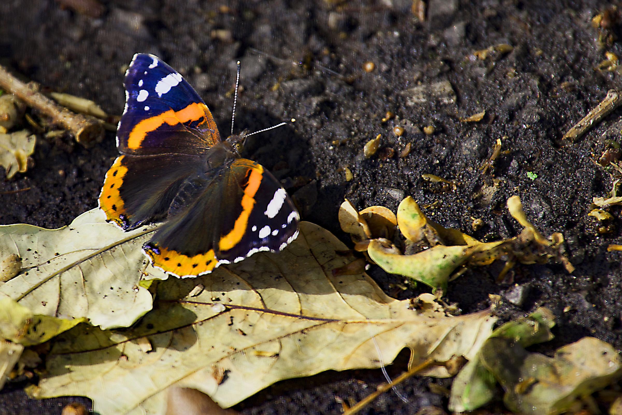 Butterfly 17...