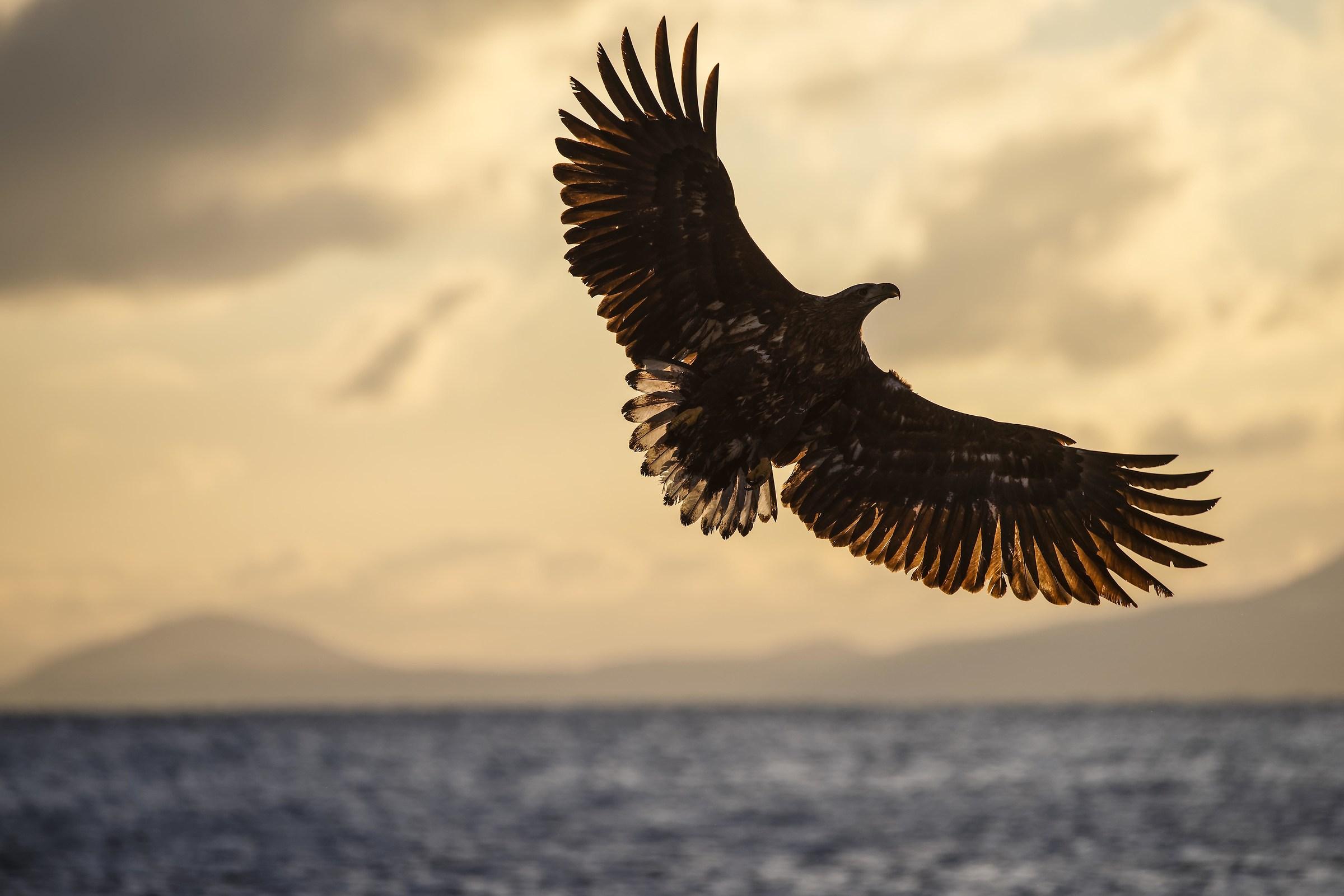 wings...
