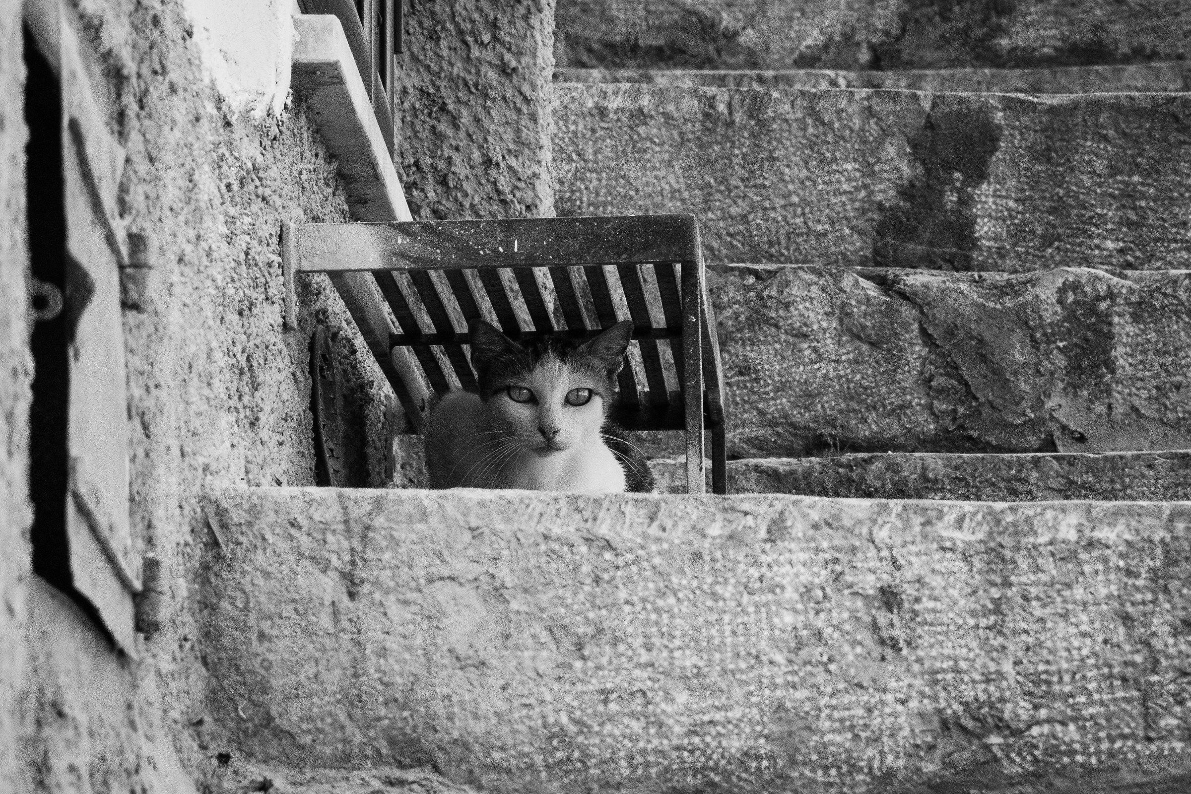 Stray cat...