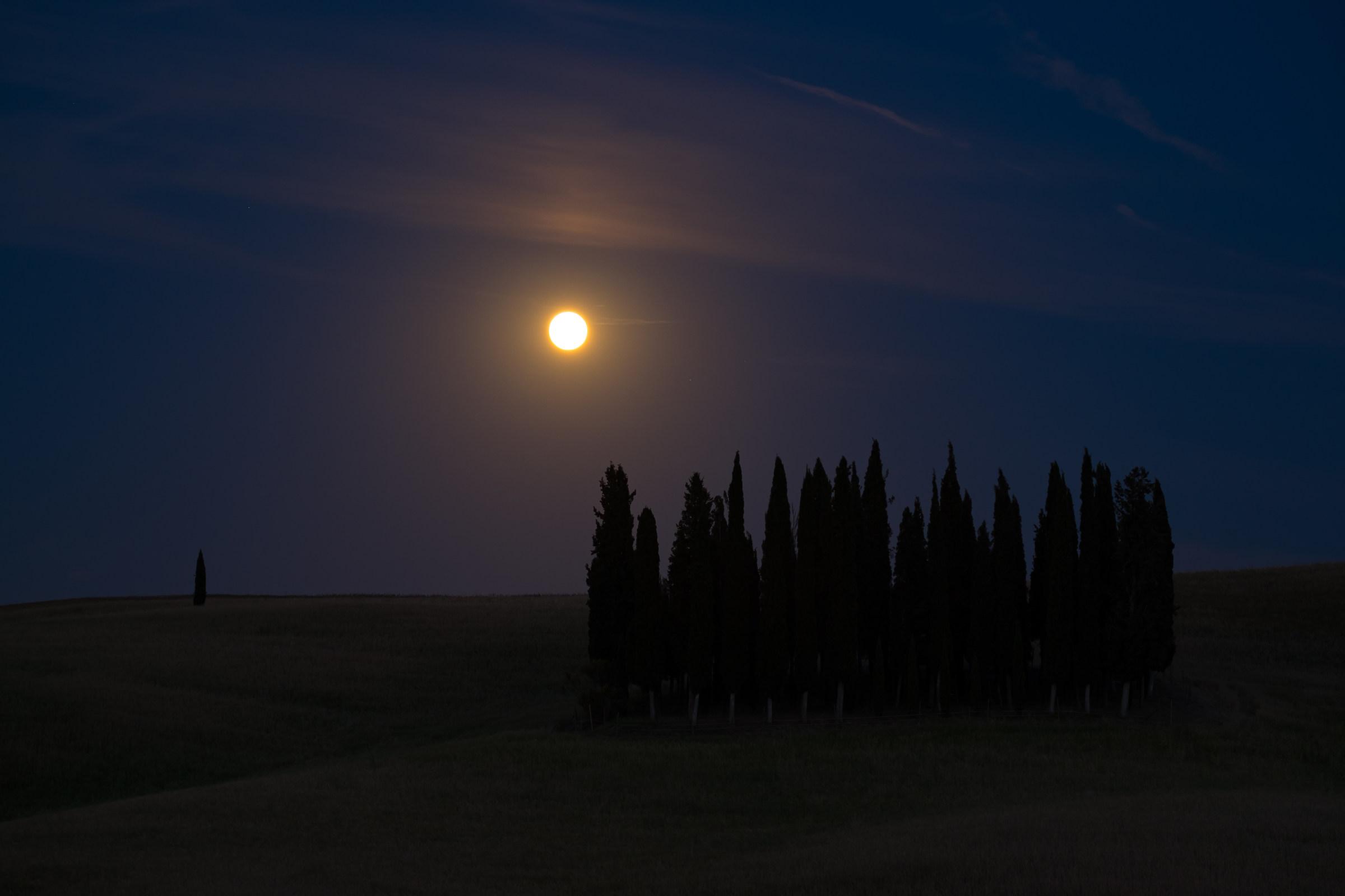 Cypresses in moonlight...