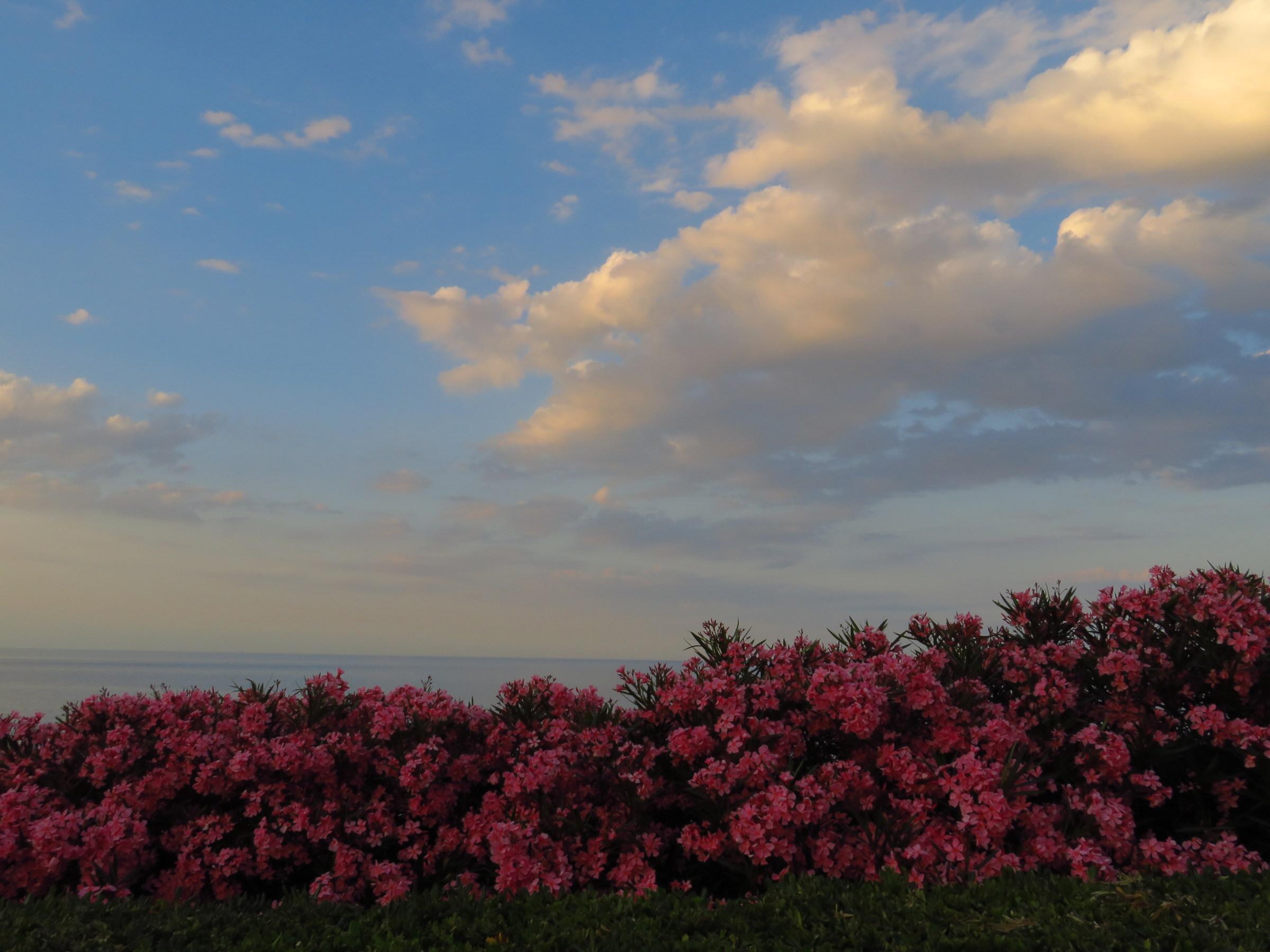 Mare e fiori...