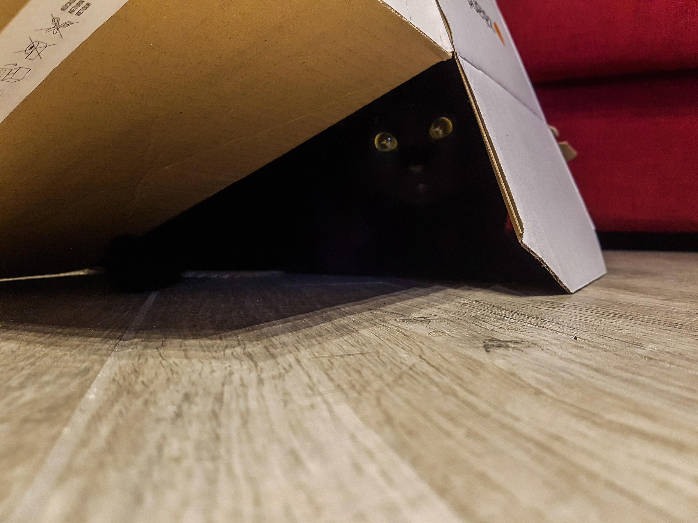 Nala hidden...