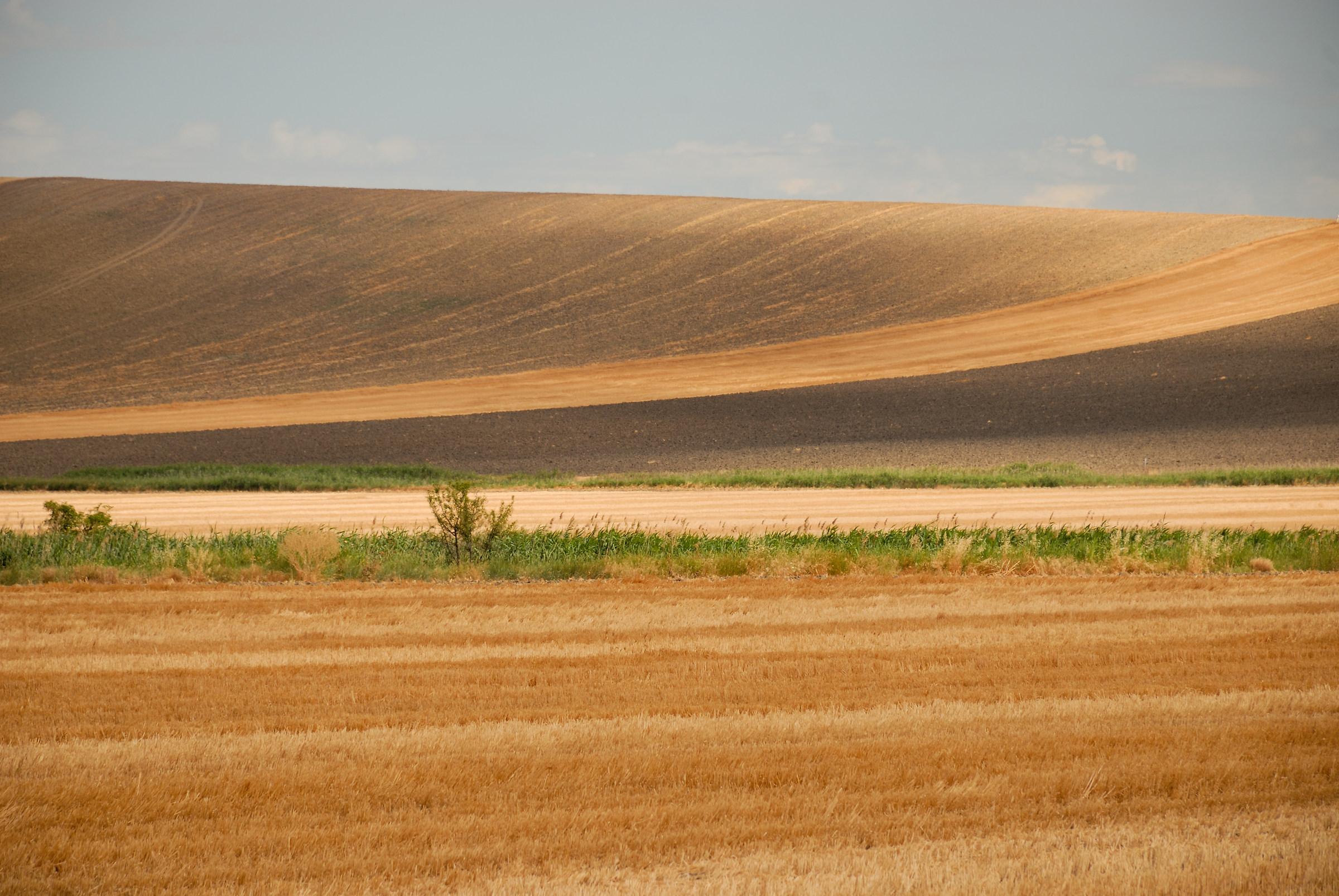 Il grano e le sue geometrie 2...