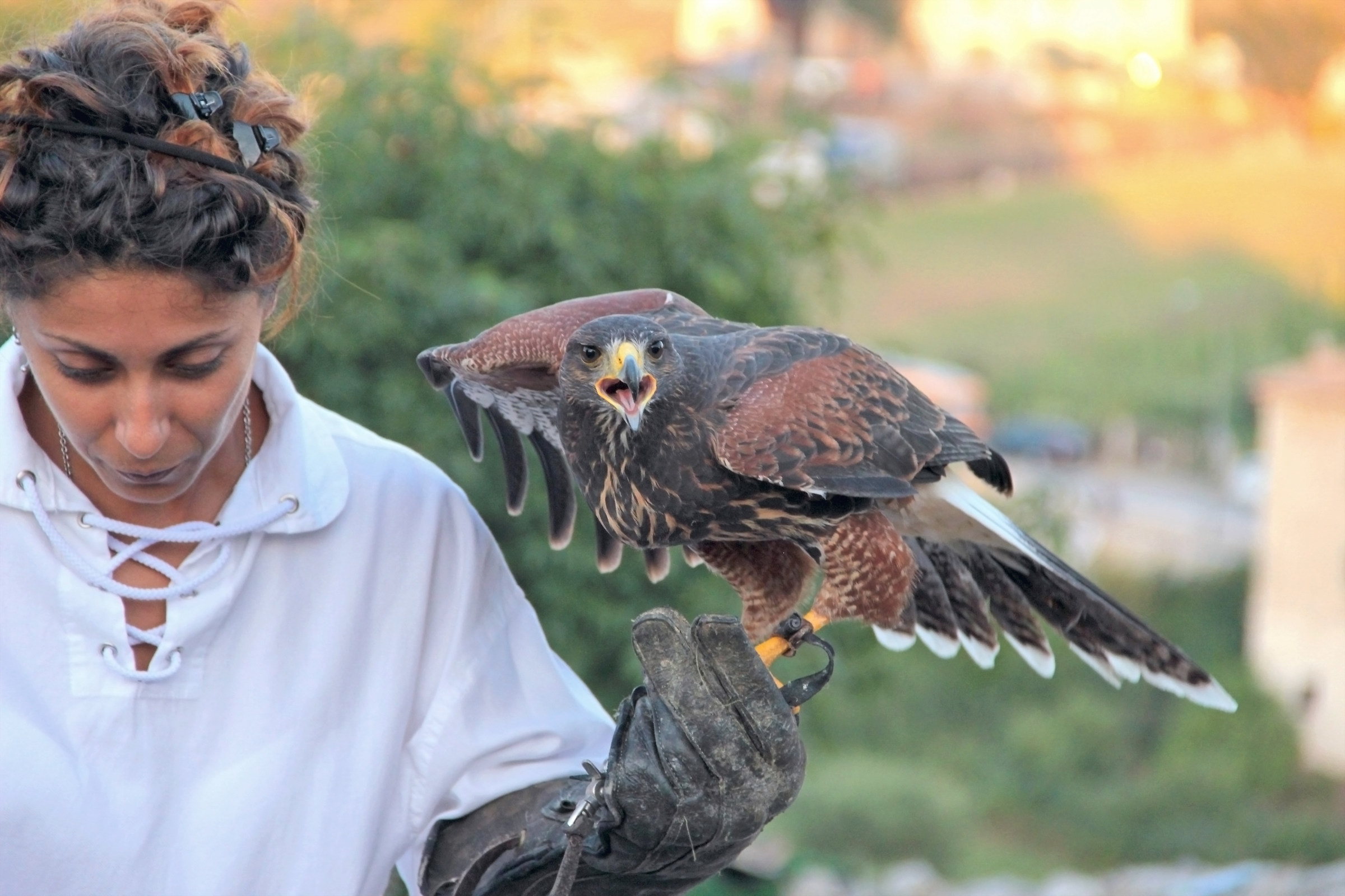 The ancient art of Falconry...