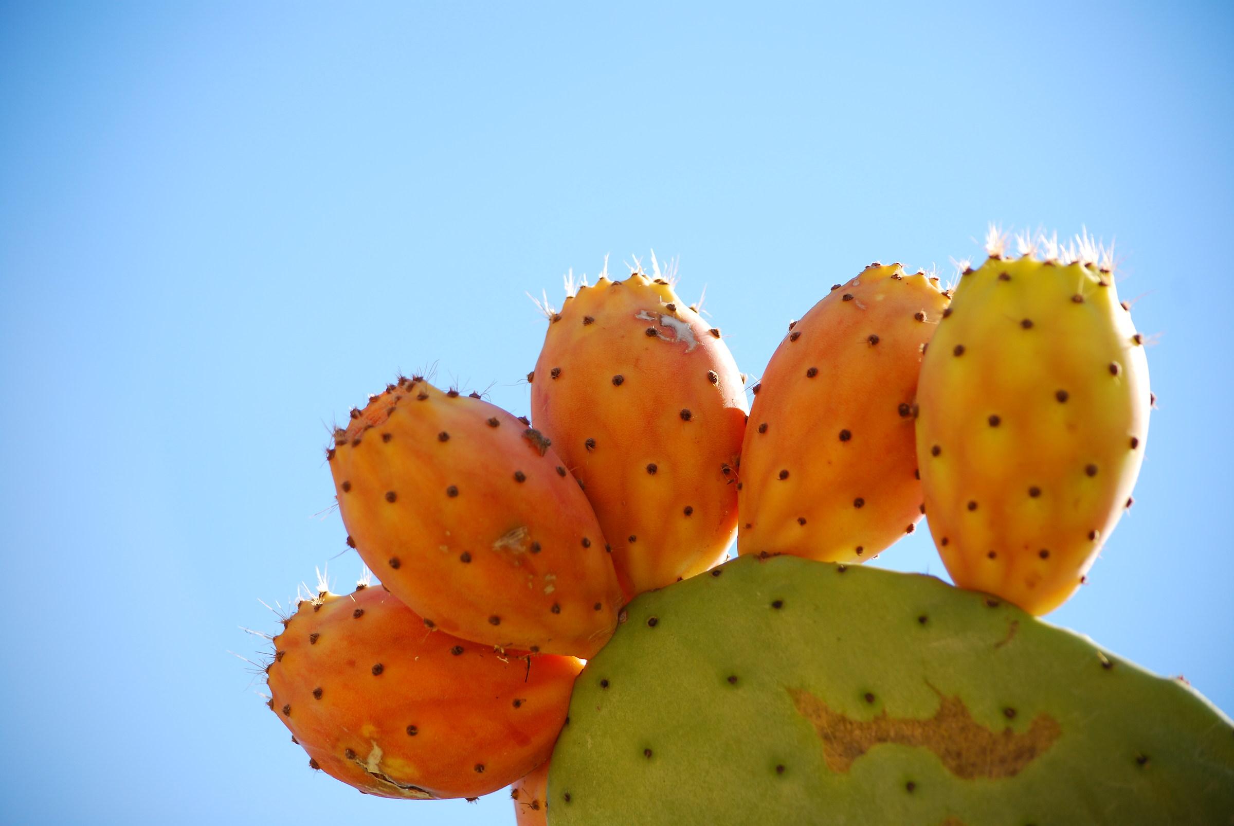Pungent fruits...