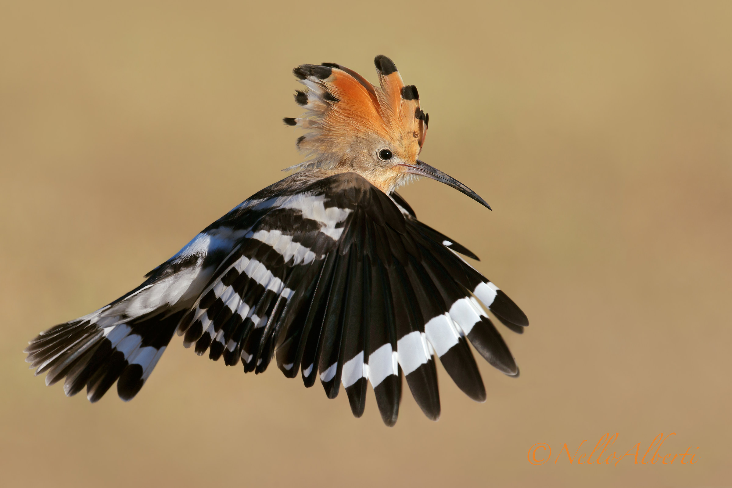 Flying in flight low wings...