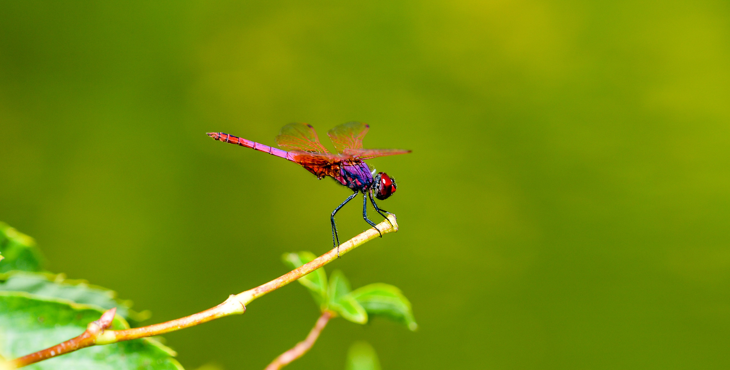 The dragonfly landing...